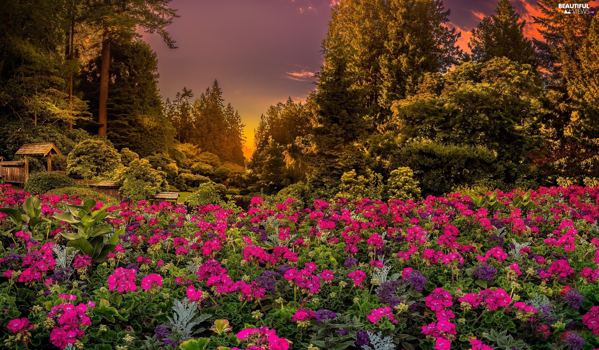 Flowers, British Columbia, Park, viewes, Garden, Canada, Brentwood Bay, Great Sunsets, trees, Butchart Gardens
