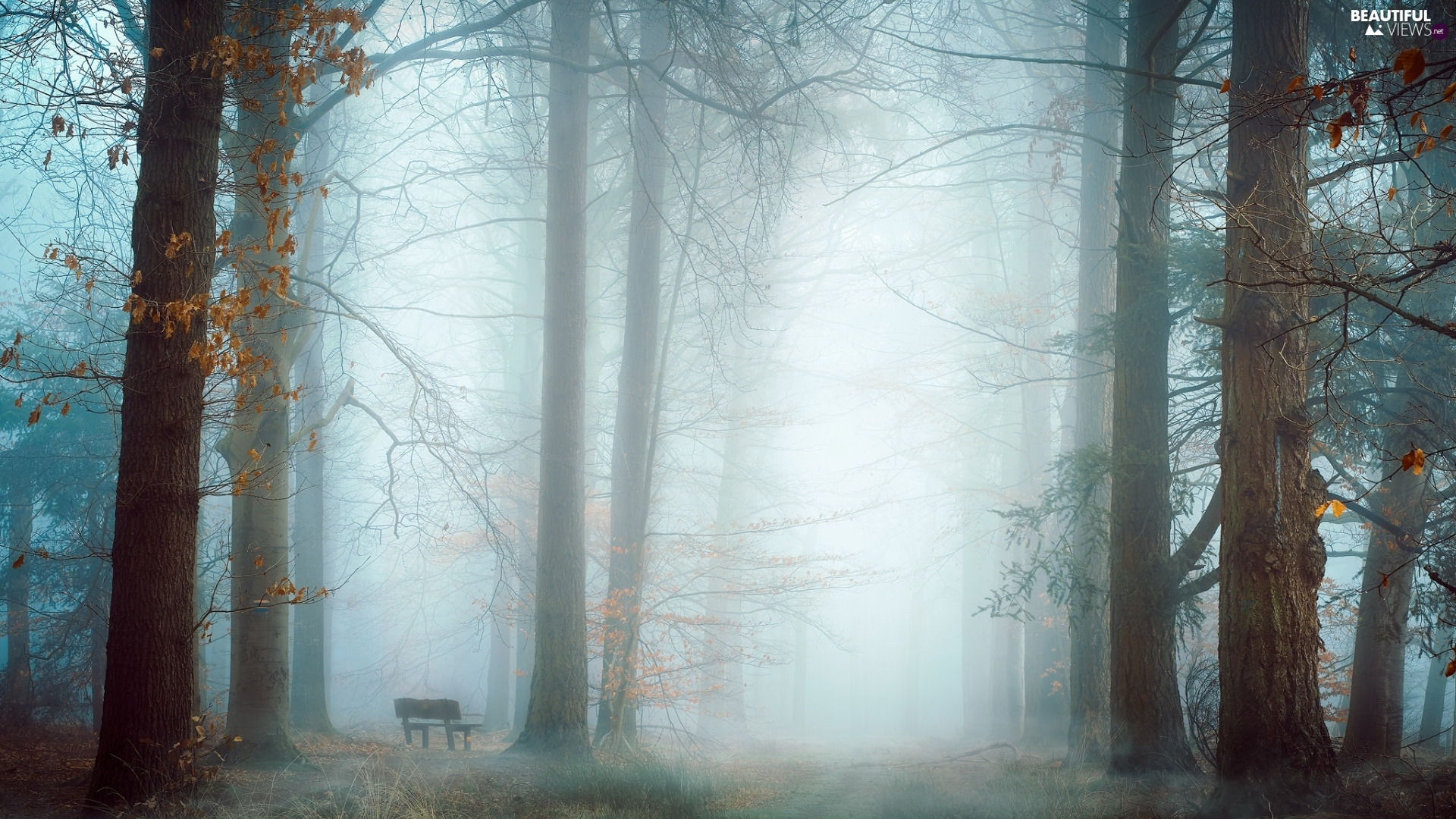 Fog, Bench, trees, viewes, forest