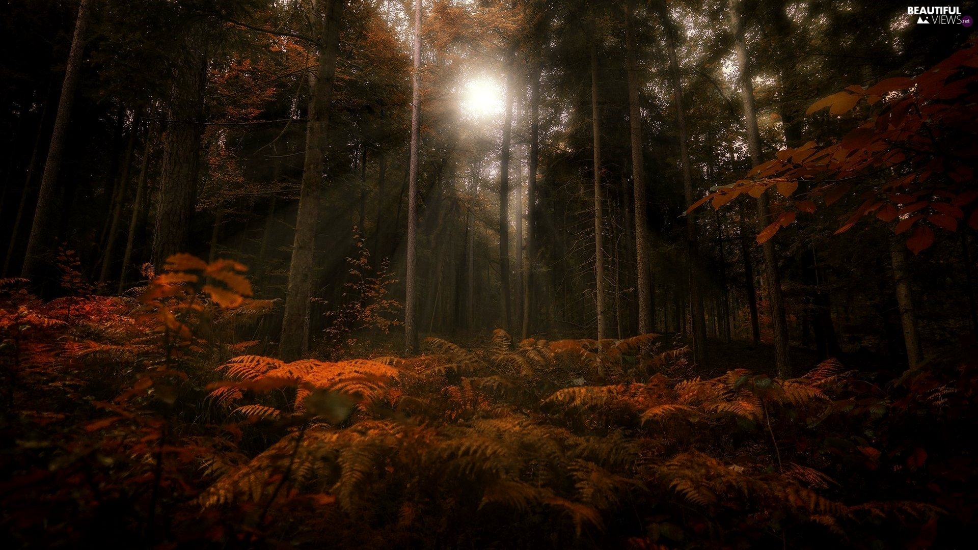 autumn, fern, light breaking through sky, forest