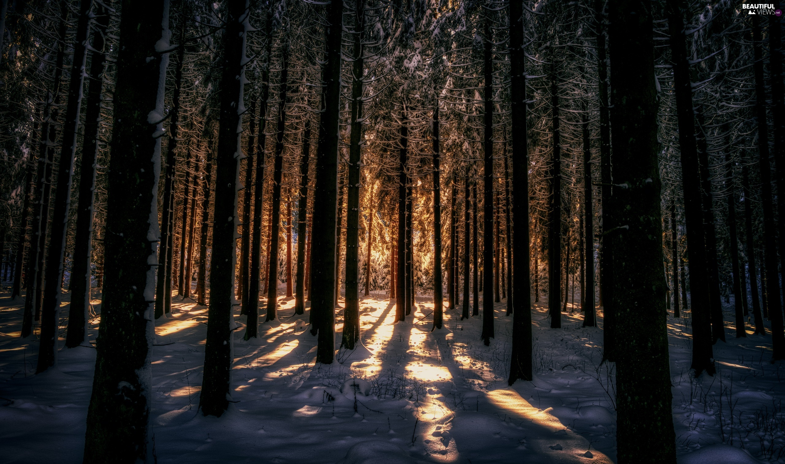 forest, snow, light breaking through sky, winter