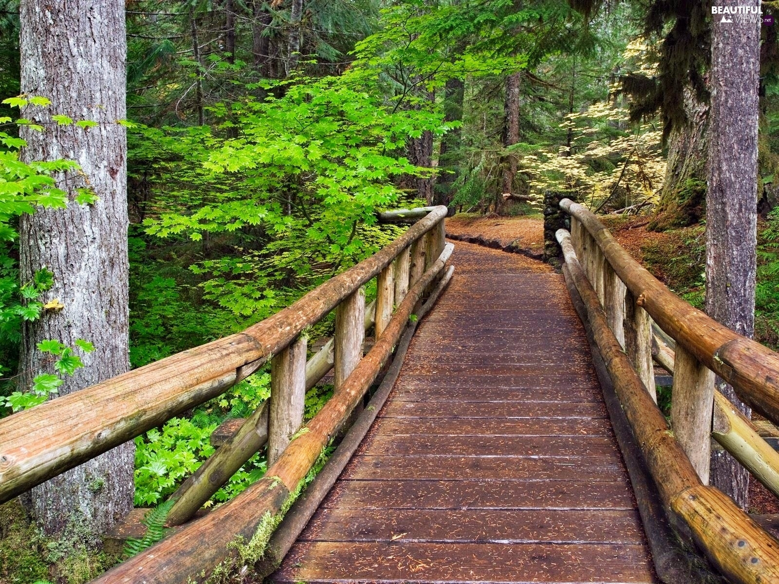 bridge, forest, wooden