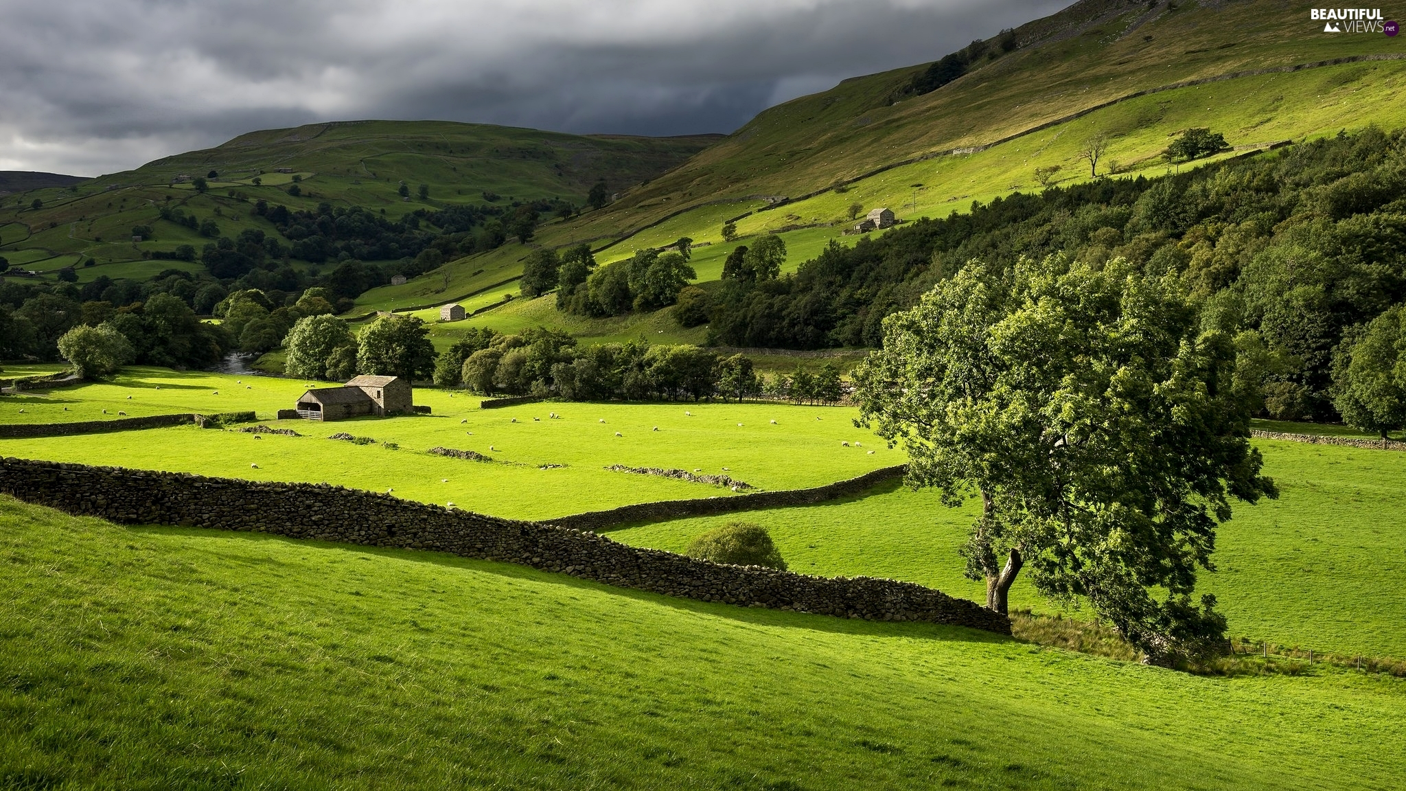 Mountains, Swaledale Valley, trees, Meadow, Stone, Sheep, buildings, England, Yorkshire Dales National Park, walls, viewes