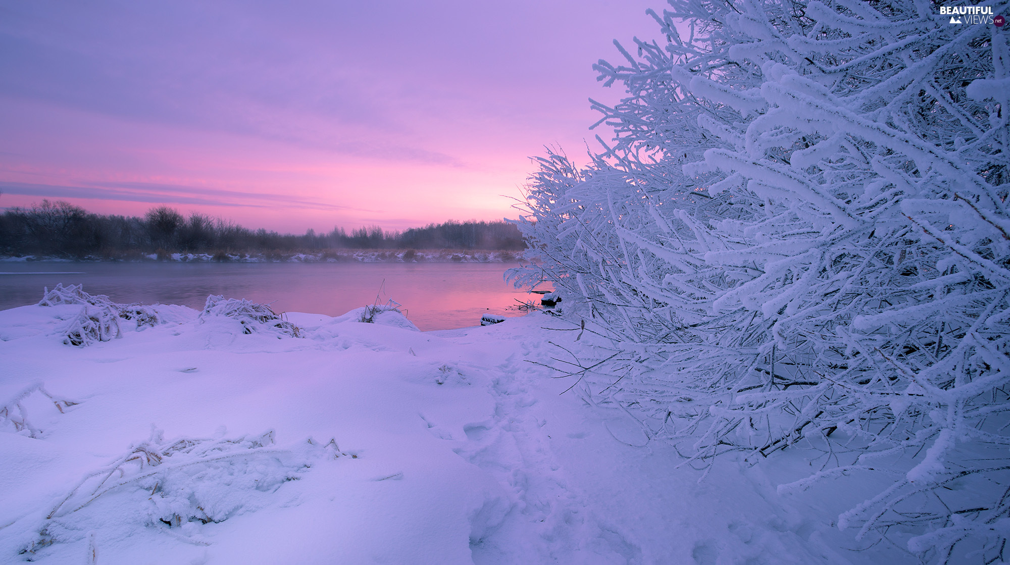 Bush, trees, lake, viewes, winter, White frost, Great Sunsets