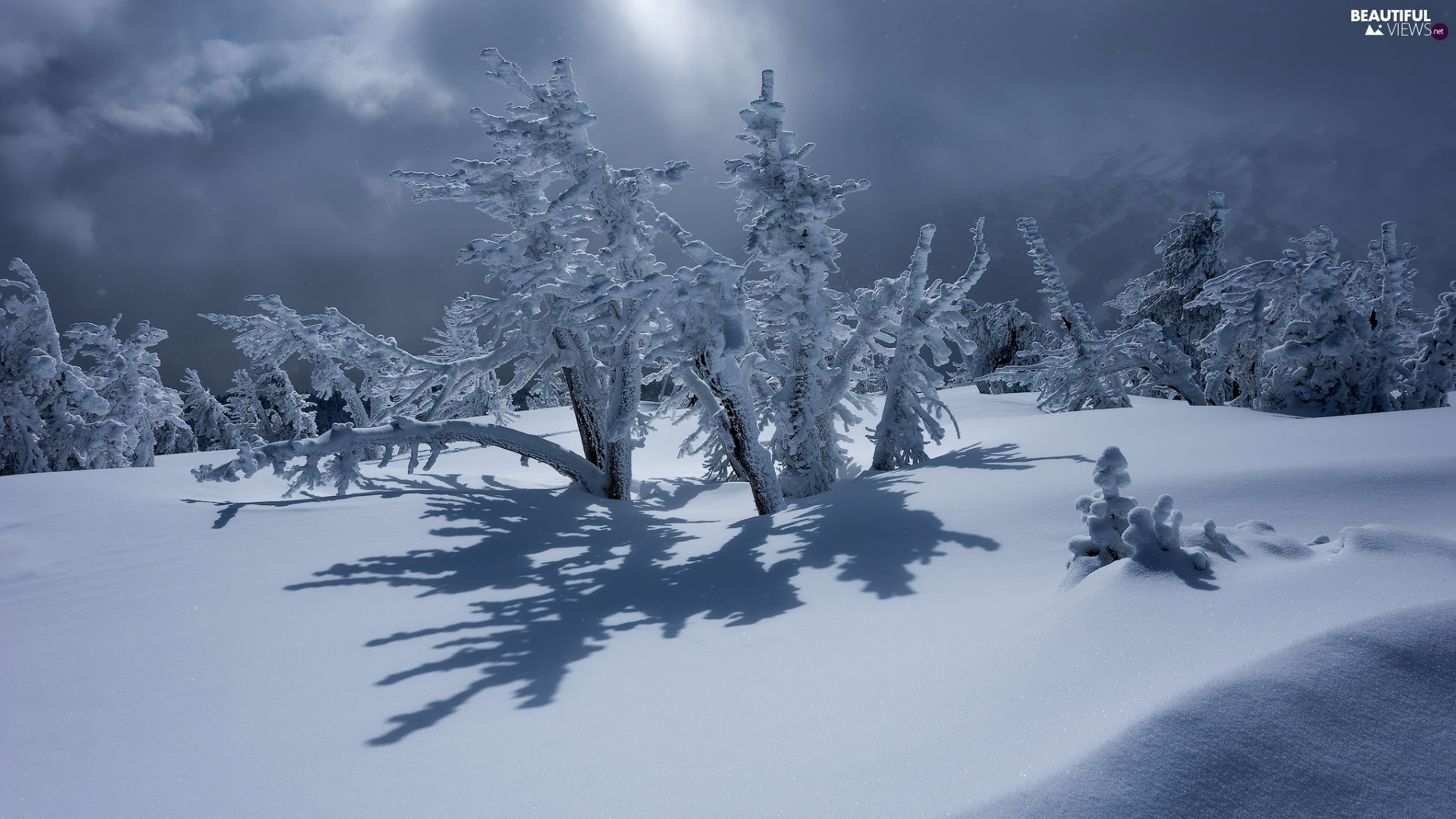 Snowy, winter, viewes, Bush, trees, snow