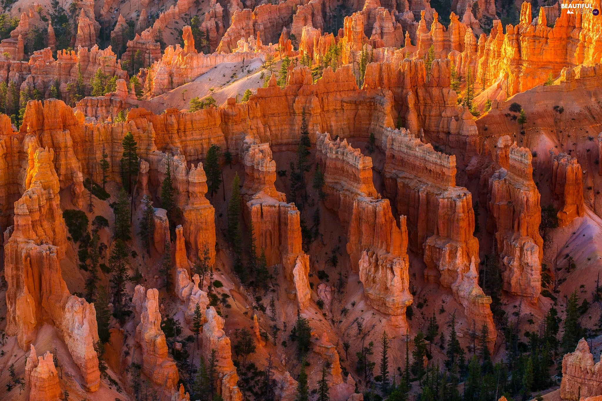Bryce Canyon National Park, The United States, trees, viewes, canyon, Utah State