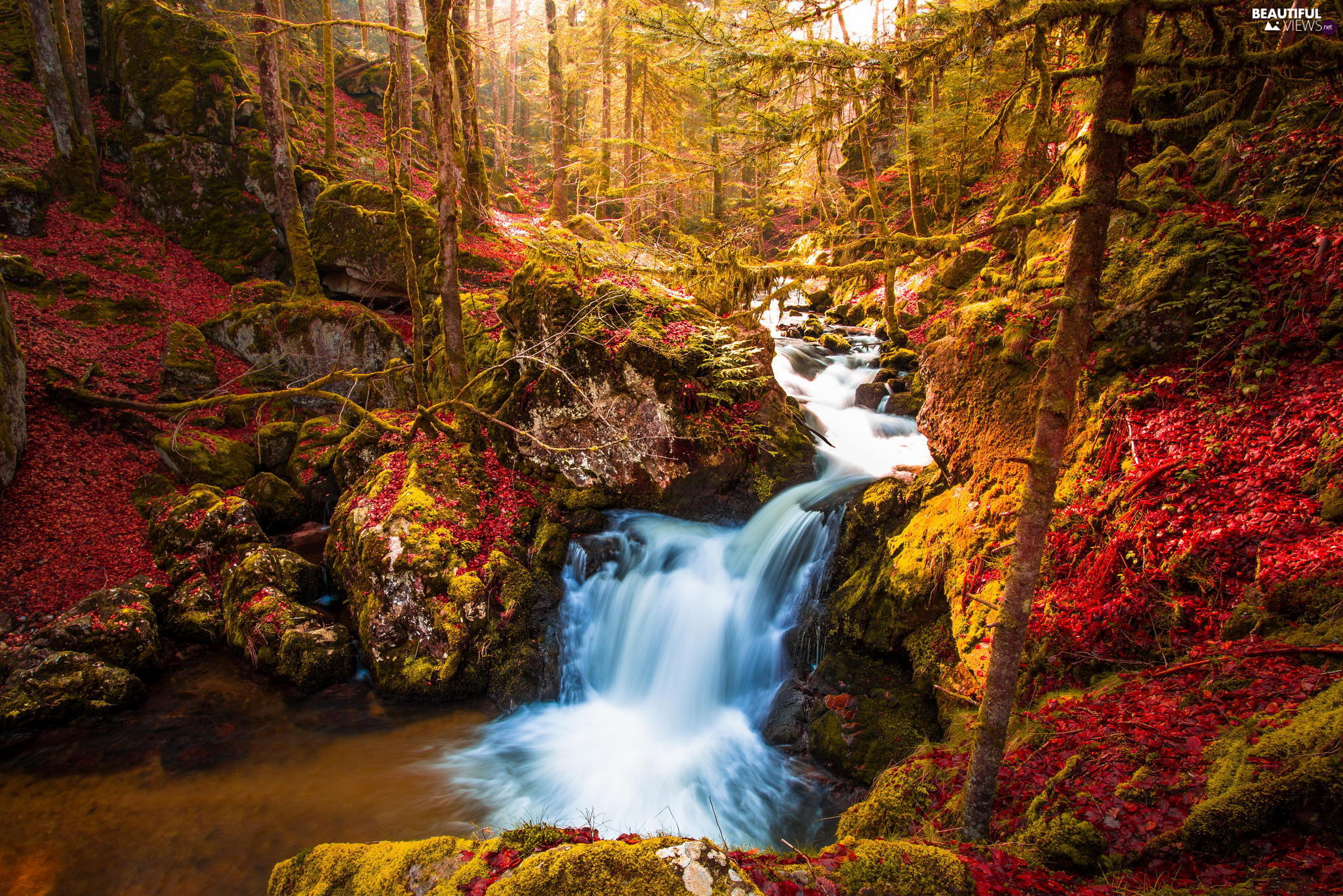 trees, autumn, River, cascade, viewes, forest