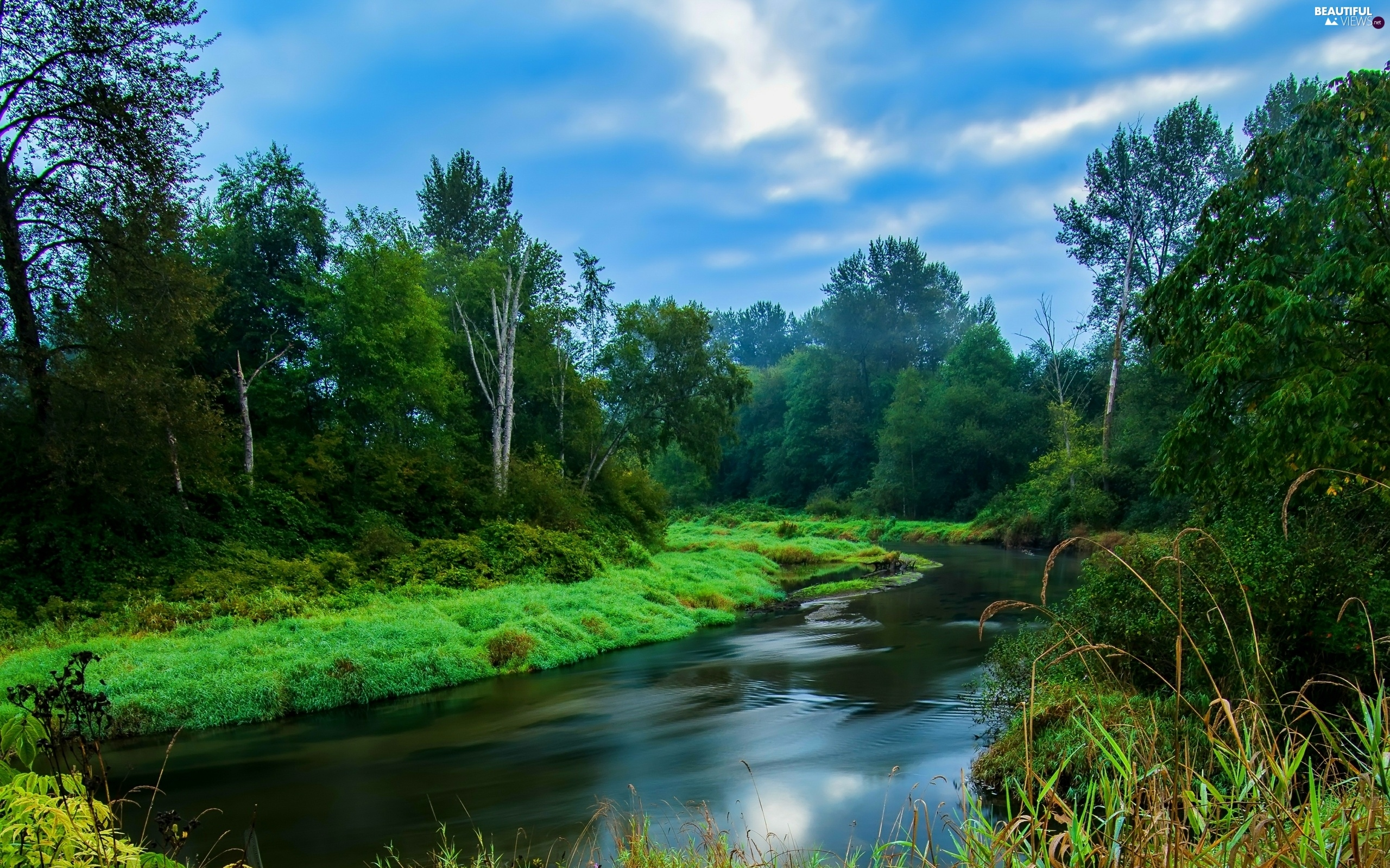 River, grass, clouds, forest