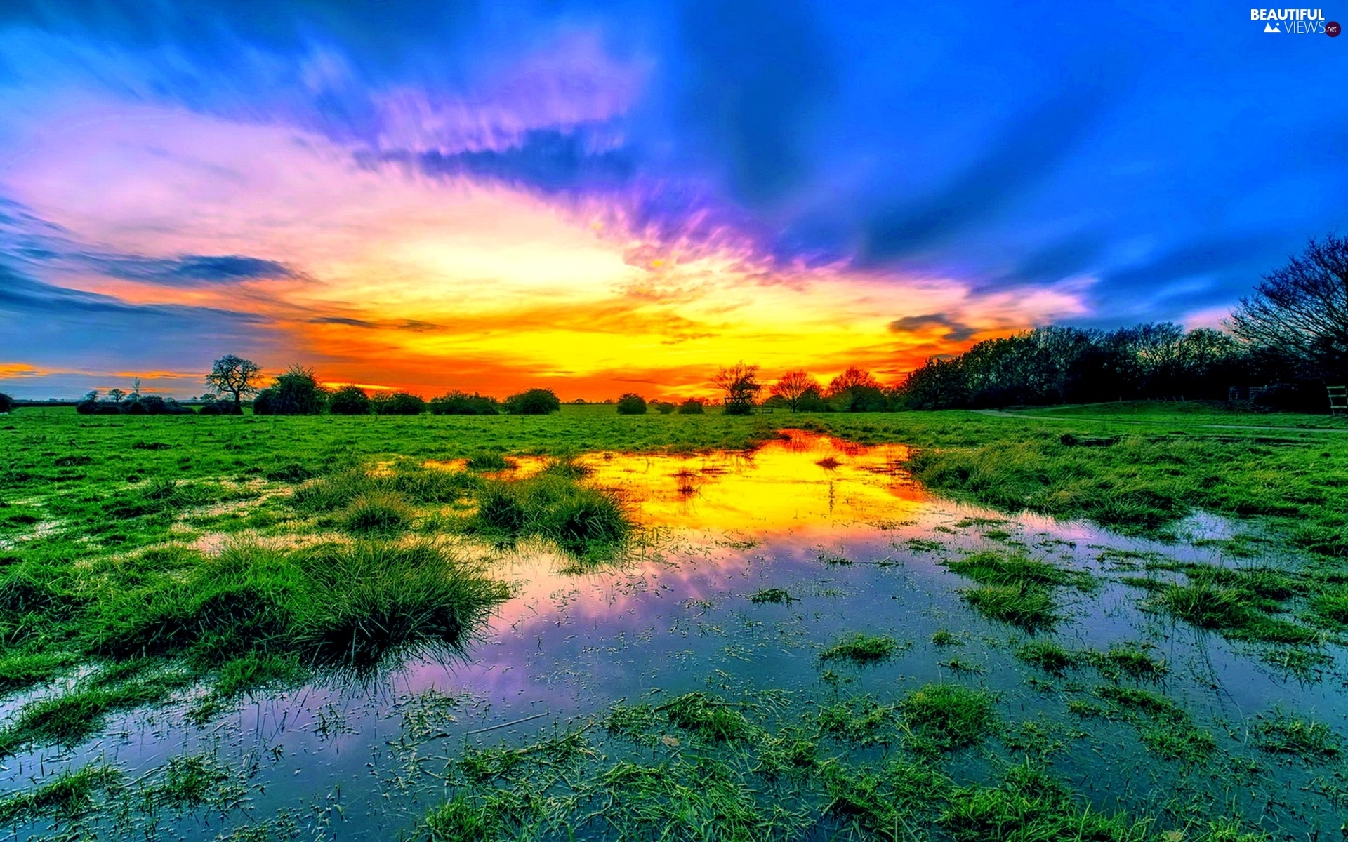 clouds, Meadow, trees, viewes, Great Sunsets, swamp