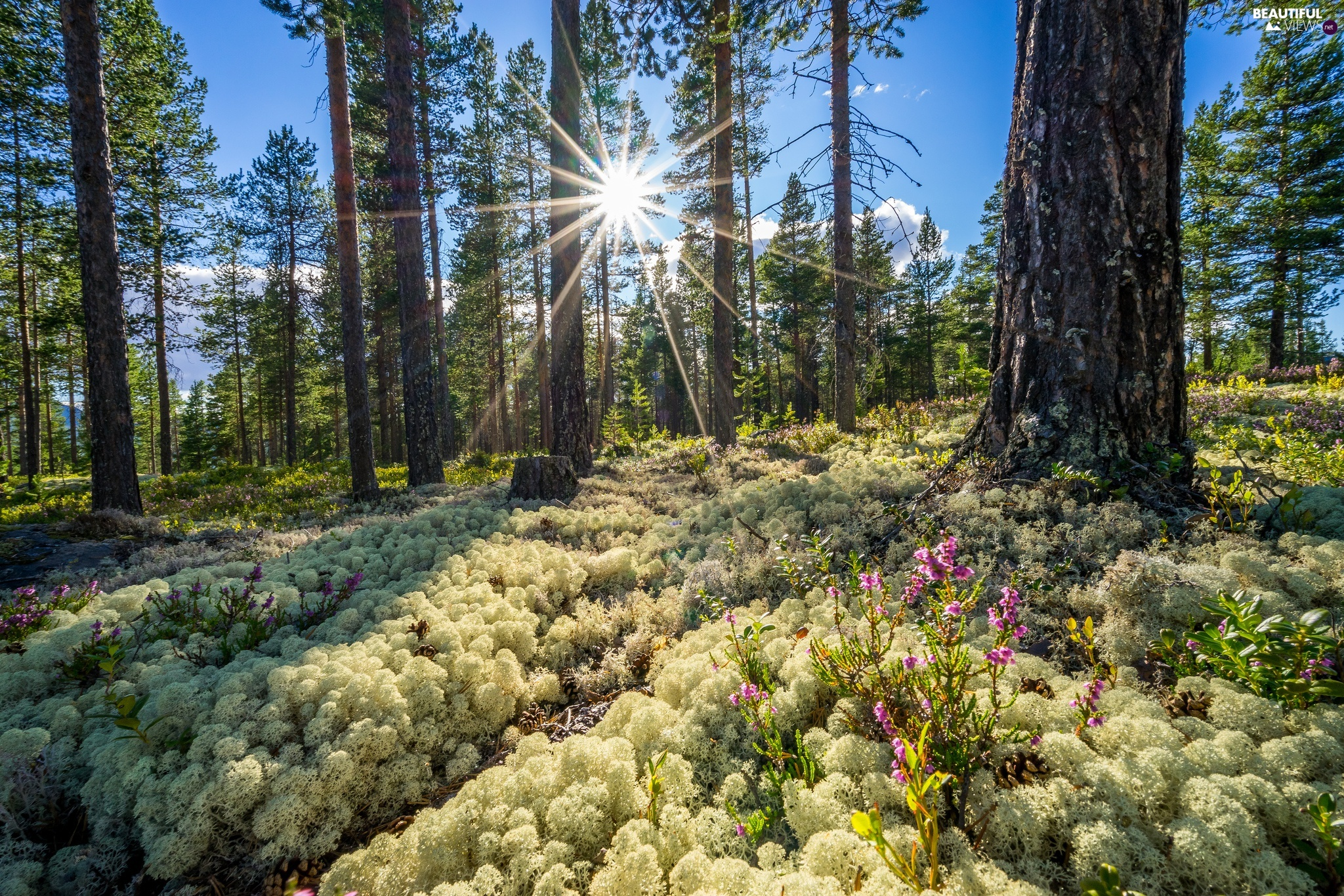 Spring, Sunrise, Buskerud District, forest, Norway