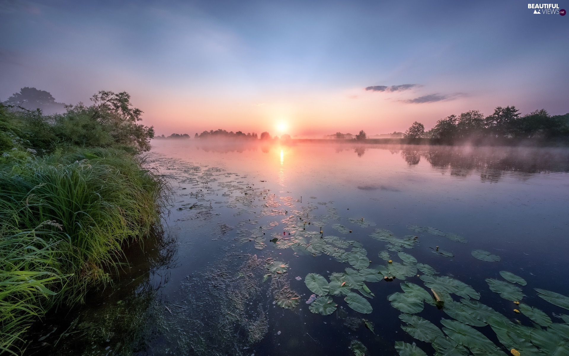Dubna River, grass, lilies, water, Latgale, Latvia, Sunrise, Fog, dawn