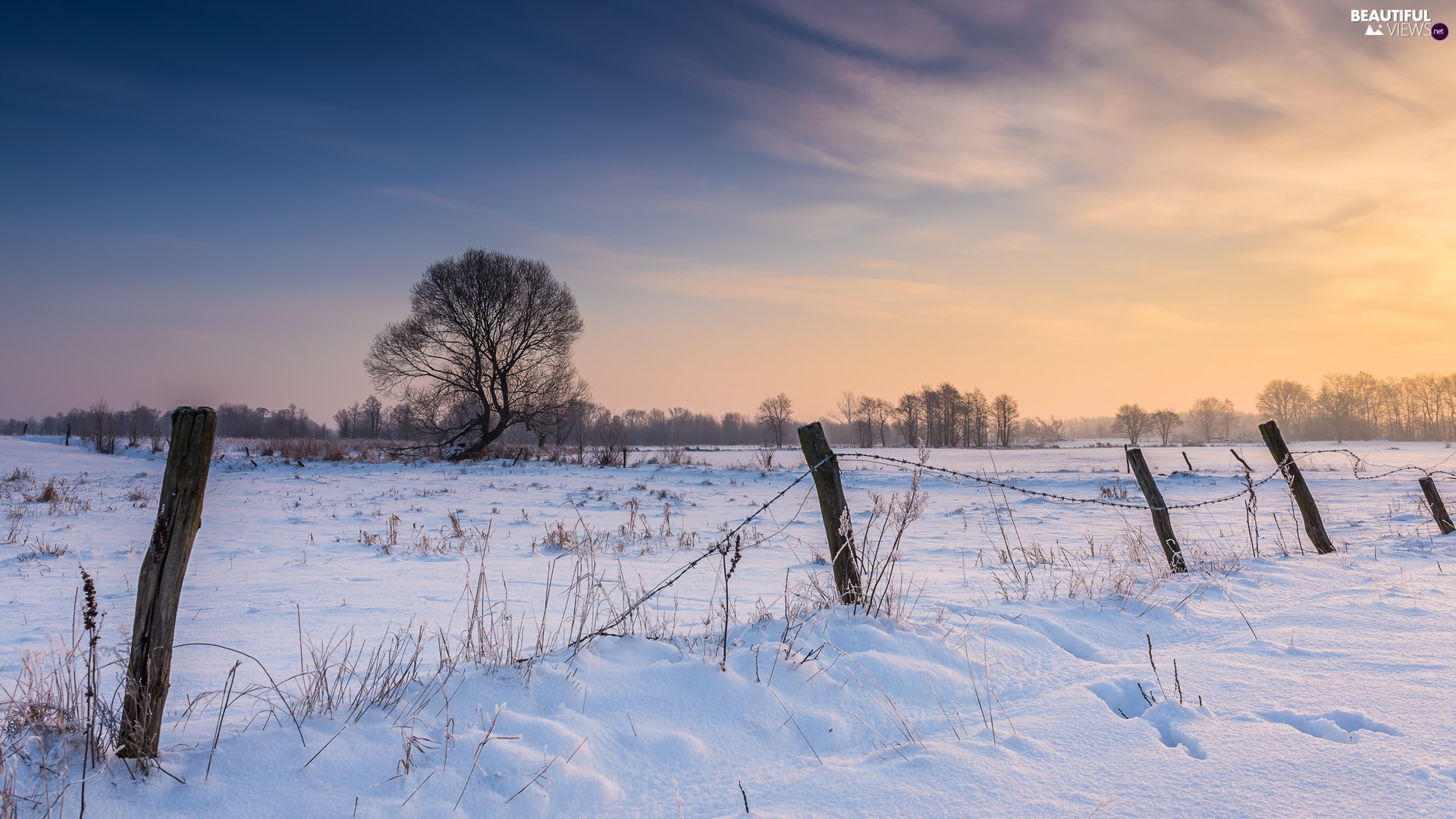 Sunrise, fence, trees, viewes, winter