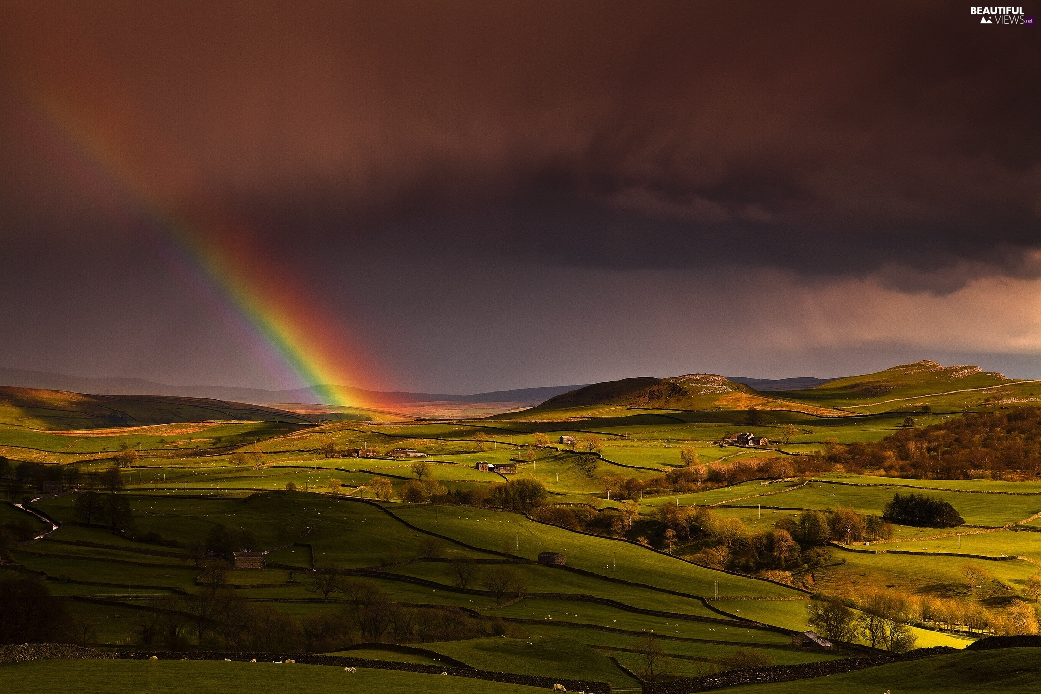 Great Rainbows, Storm, field