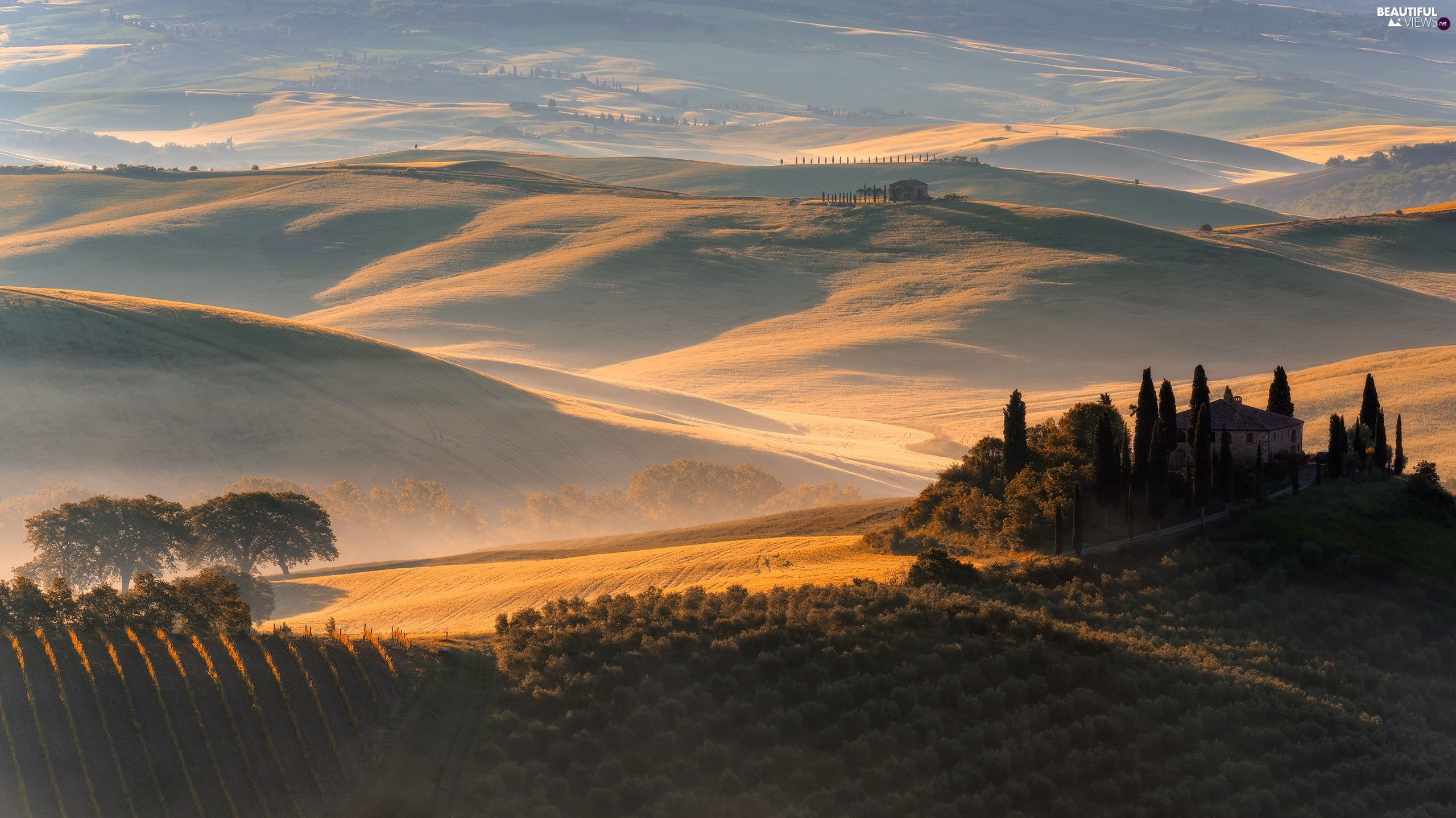 field, The Hills, Fog, trees, cypresses, Tuscany, Italy, viewes