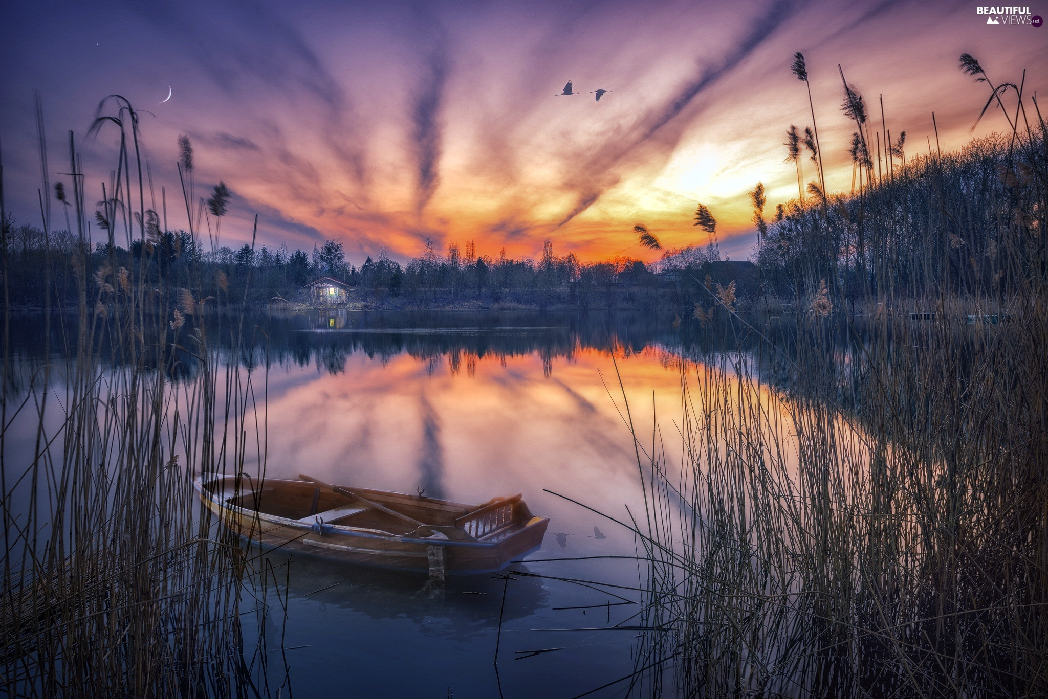 Boat, lake, birds, cane, Great Sunsets, Home, flight