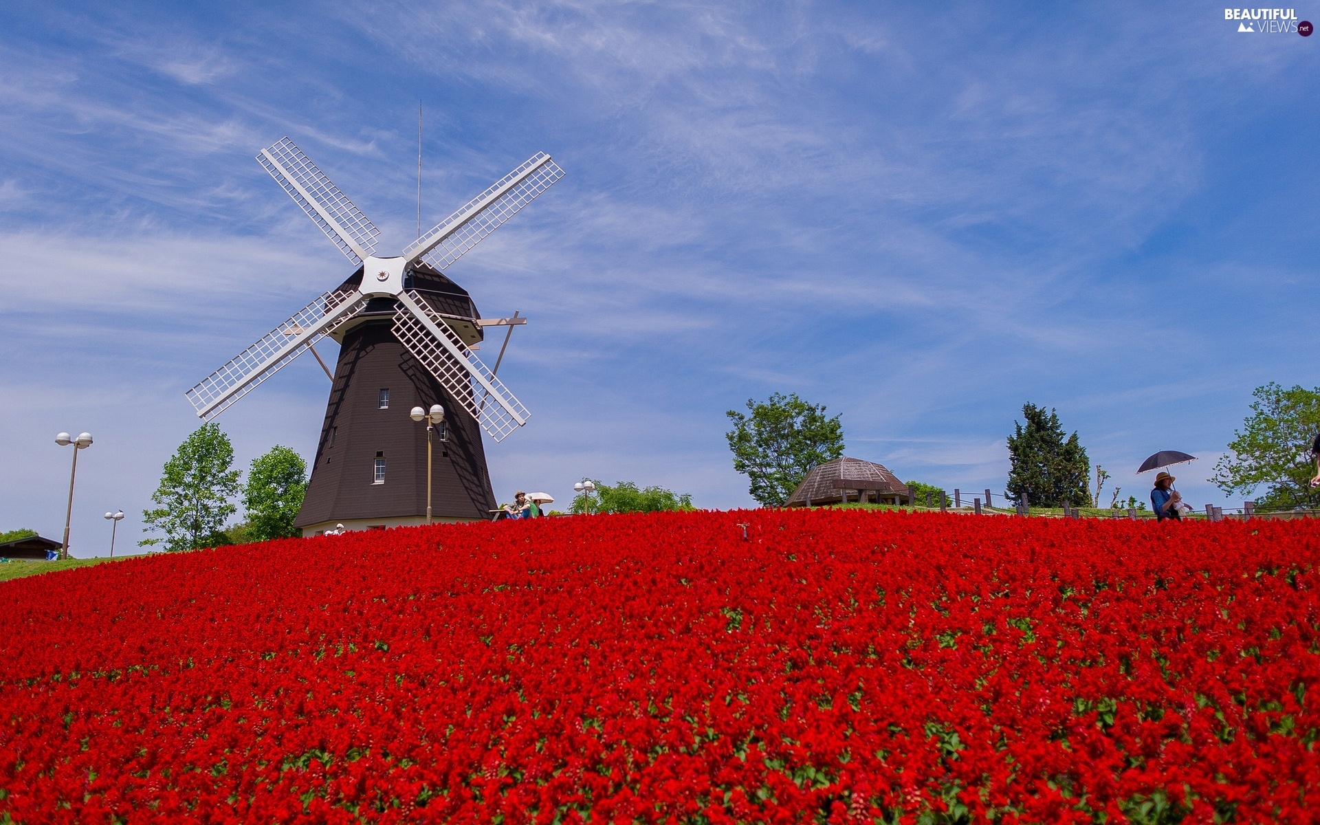 Floral, Windmill, Field