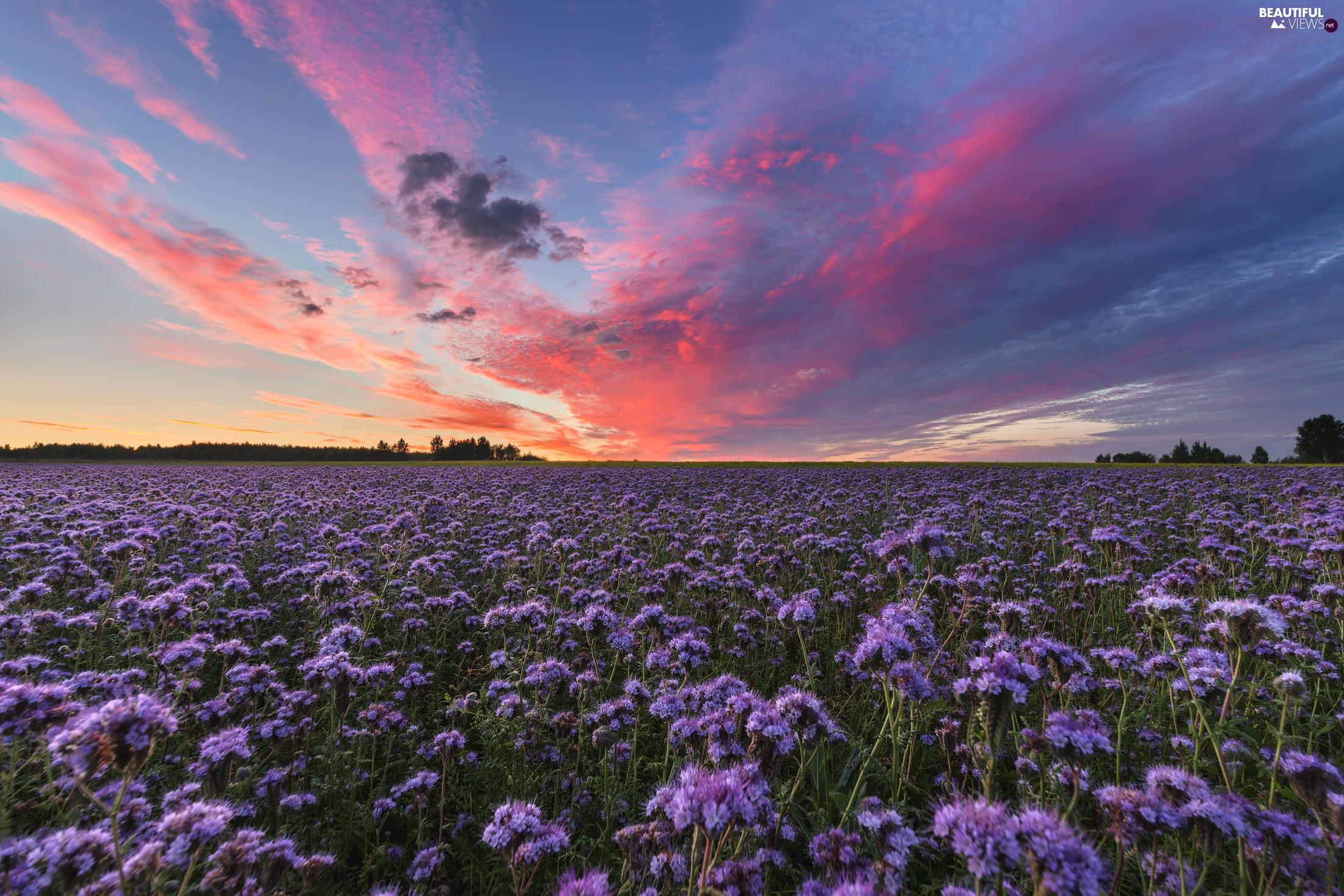 Meadow, clouds, Sunrise, Flowers