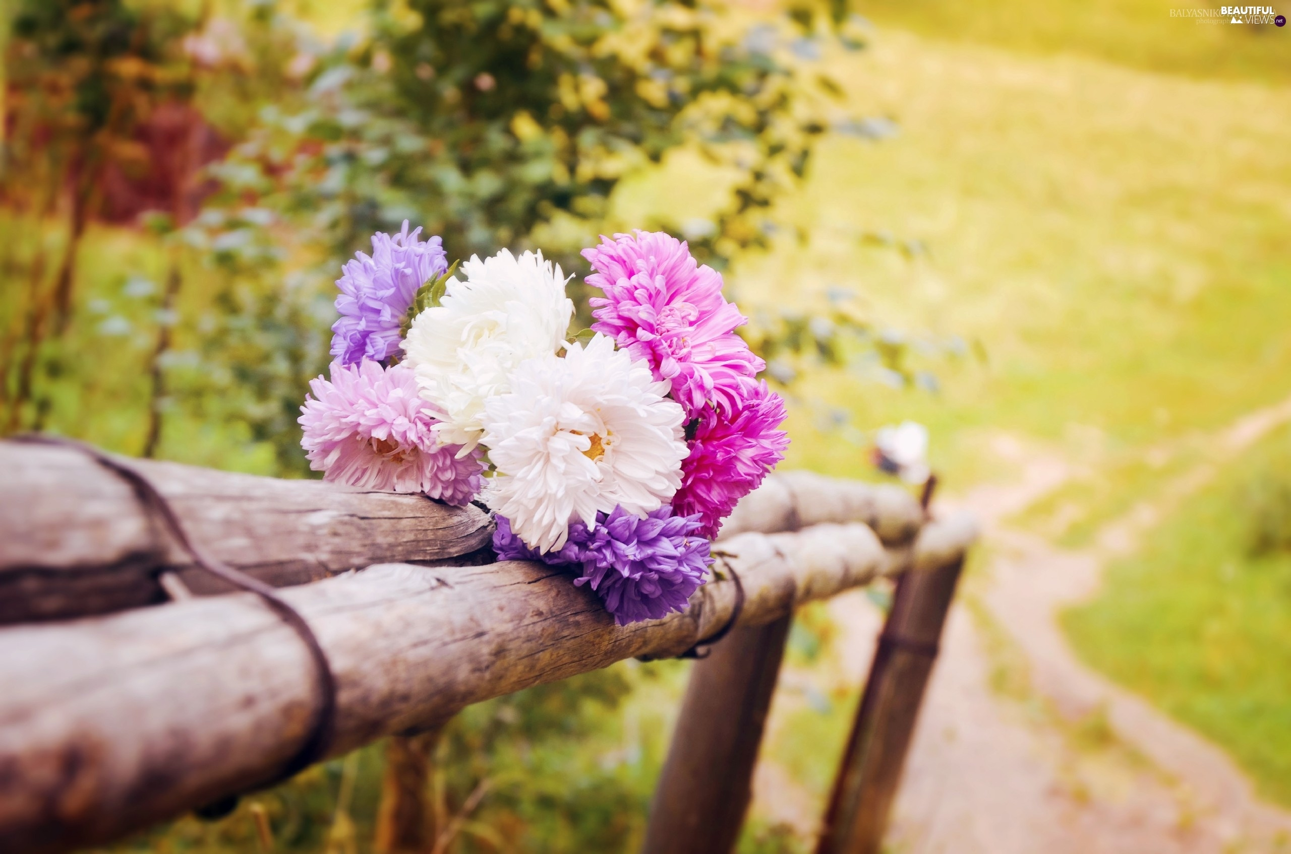 Bouquet Meadow Astra Fence Summer Flowers Path Beautiful