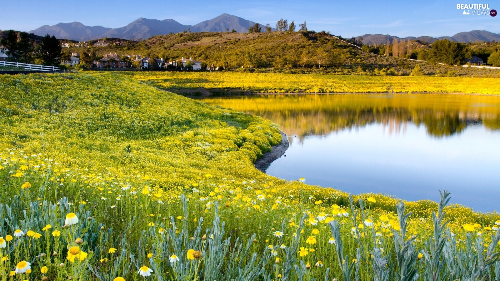 Mountains, Meadow, Flowers, Pond - car