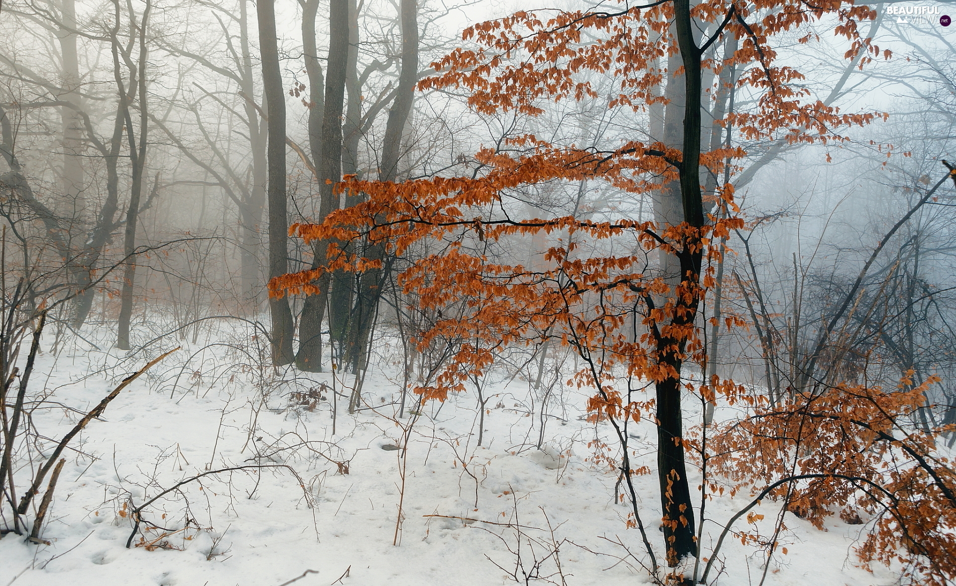 viewes, forest, branch pics, trees, winter, Bushes, Fog