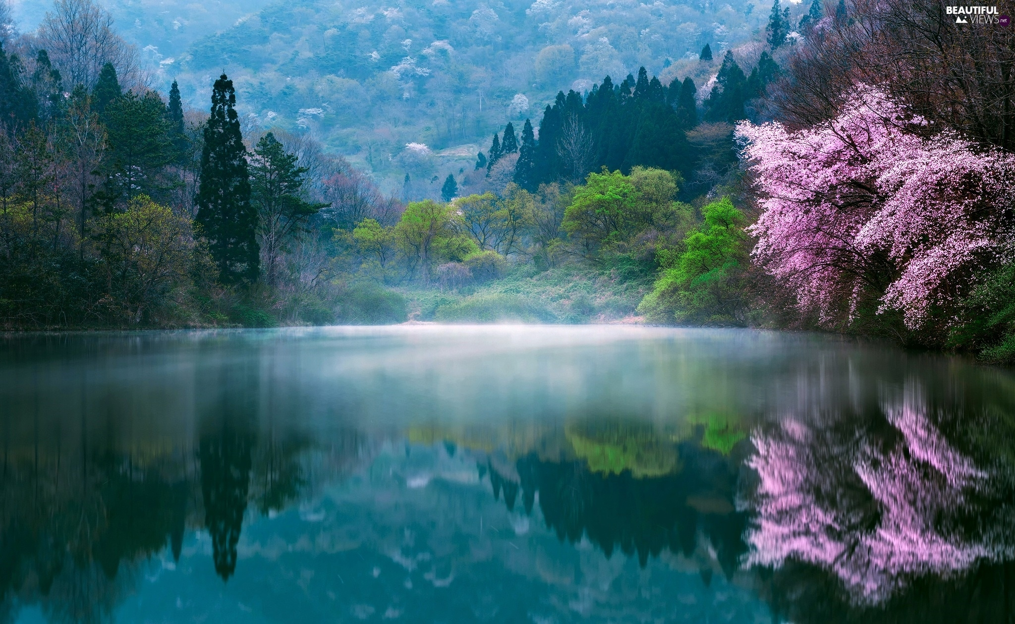 morning, Spring, trees, lake, South Korea, Fog, viewes