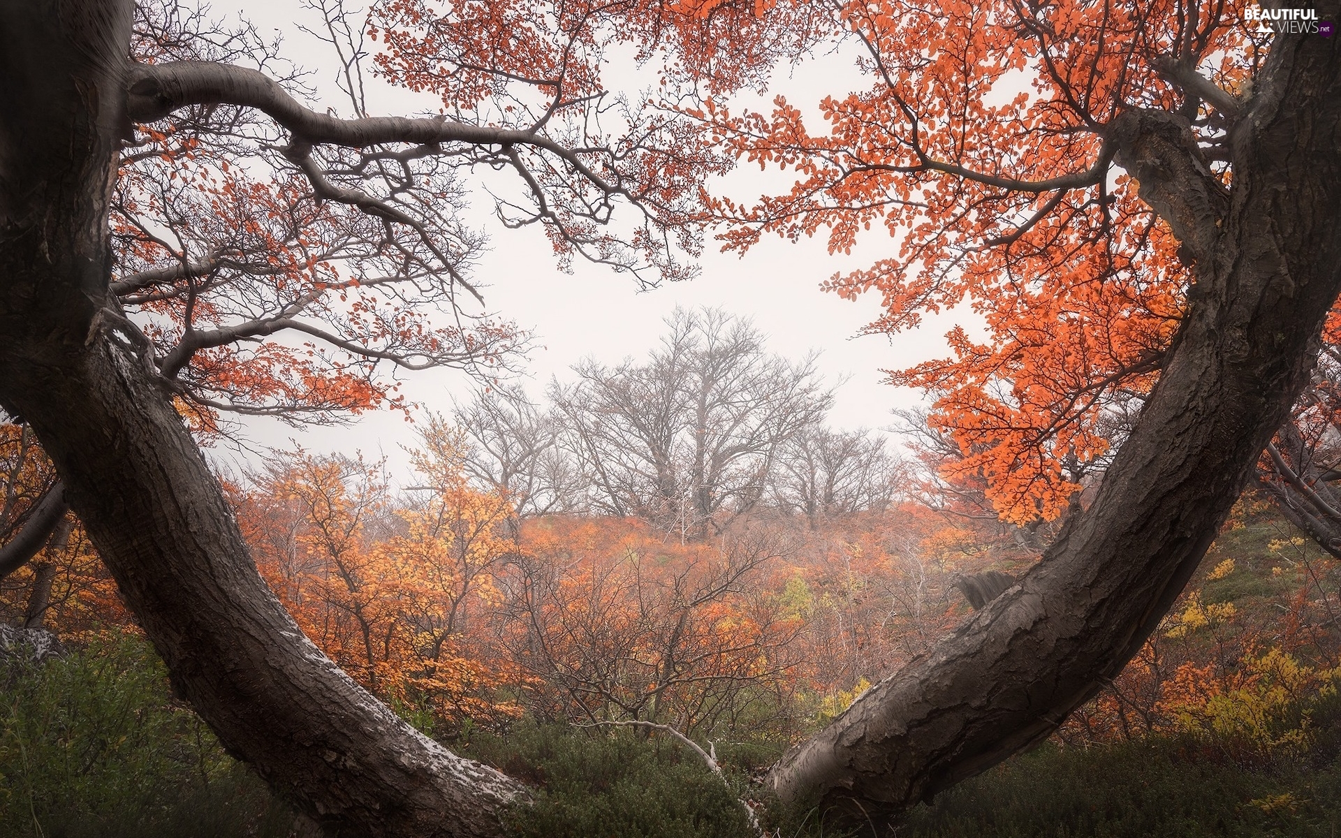 Stems, Fog, trees, viewes, autumn