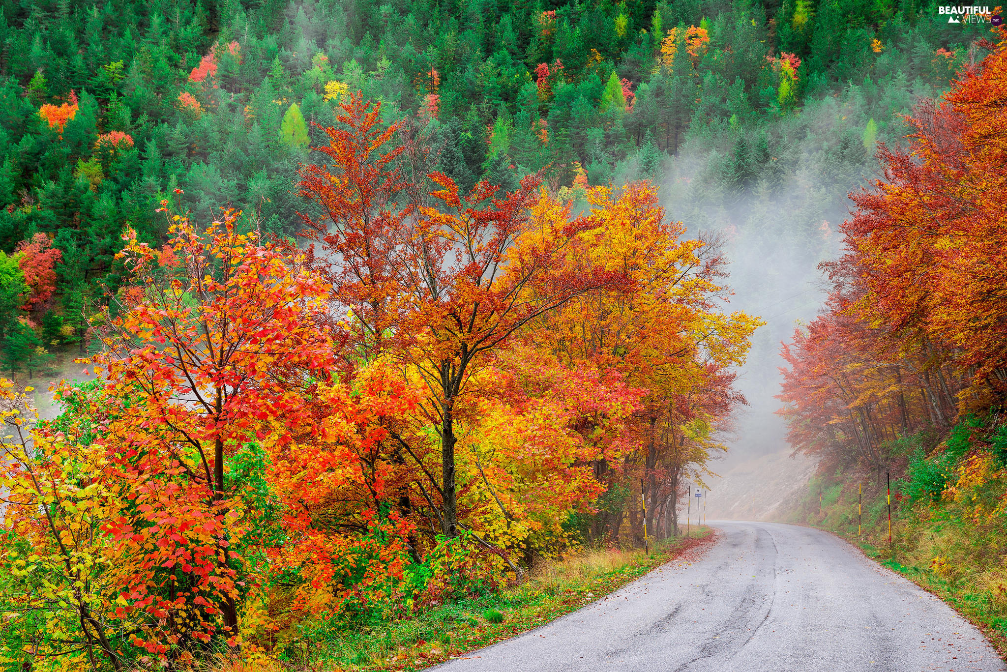 autumn, Way, trees, Fog, forest, color, viewes
