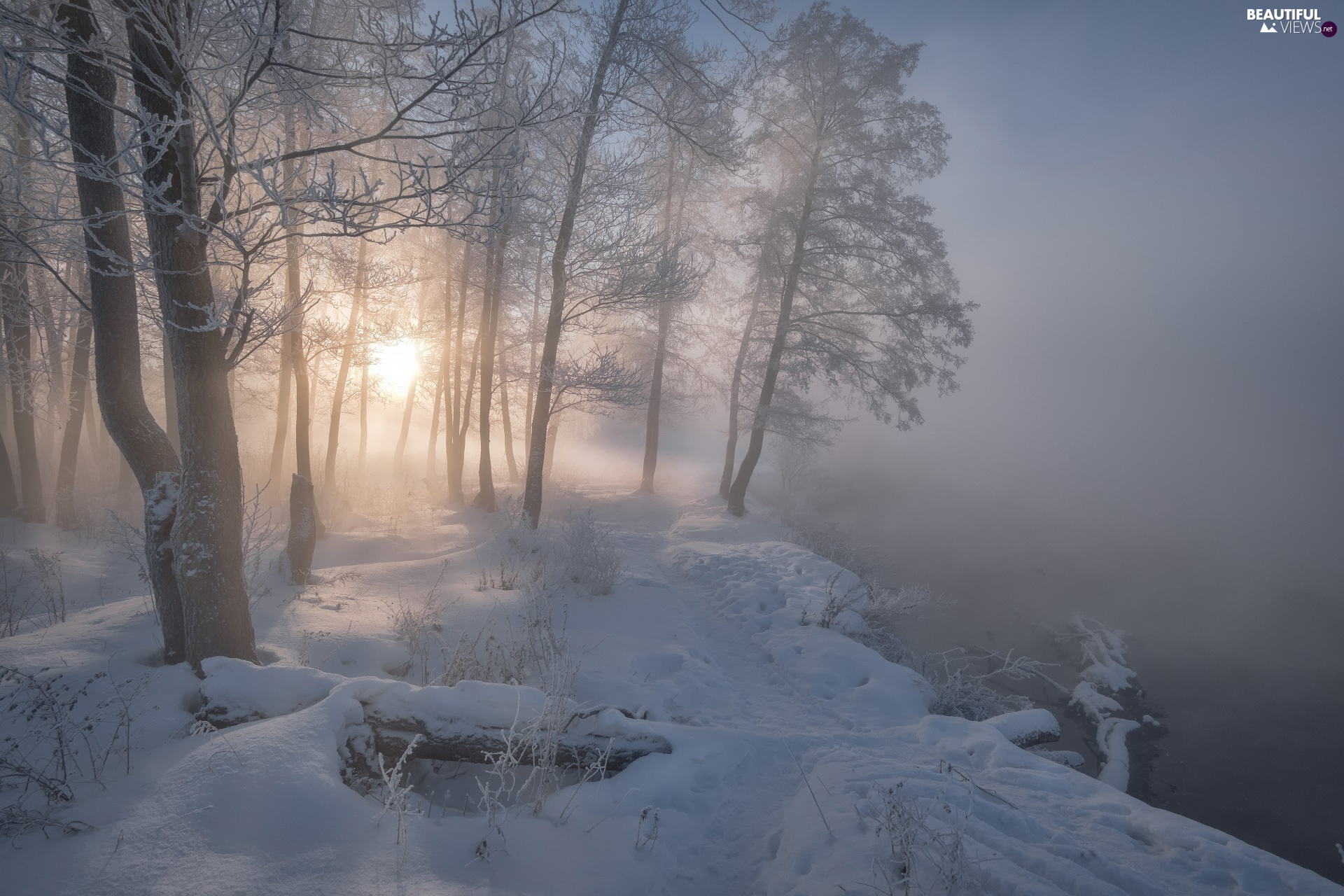 River, Fog, trees, viewes, winter