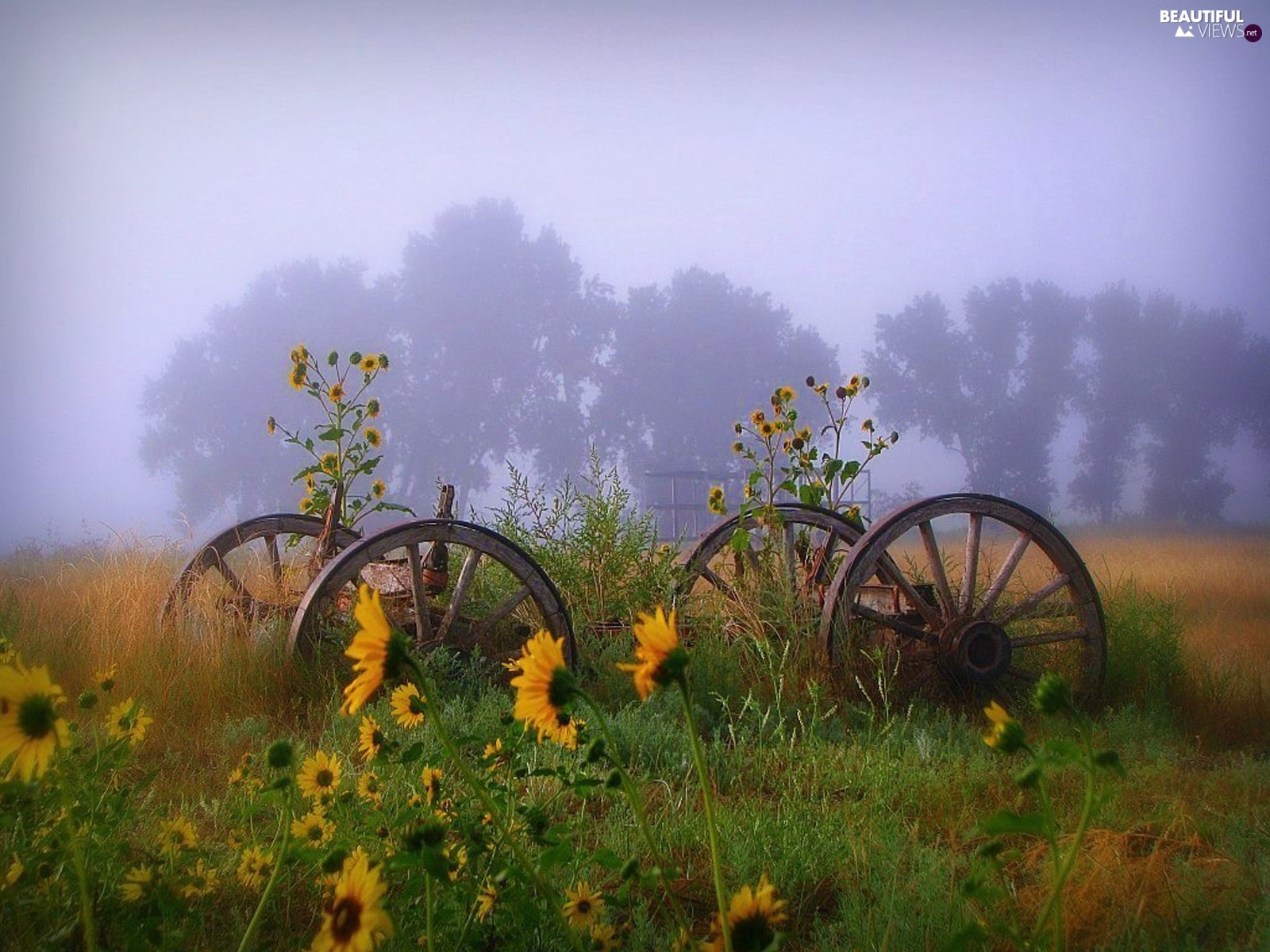 wheel, Nice sunflowers, Fog, wagon