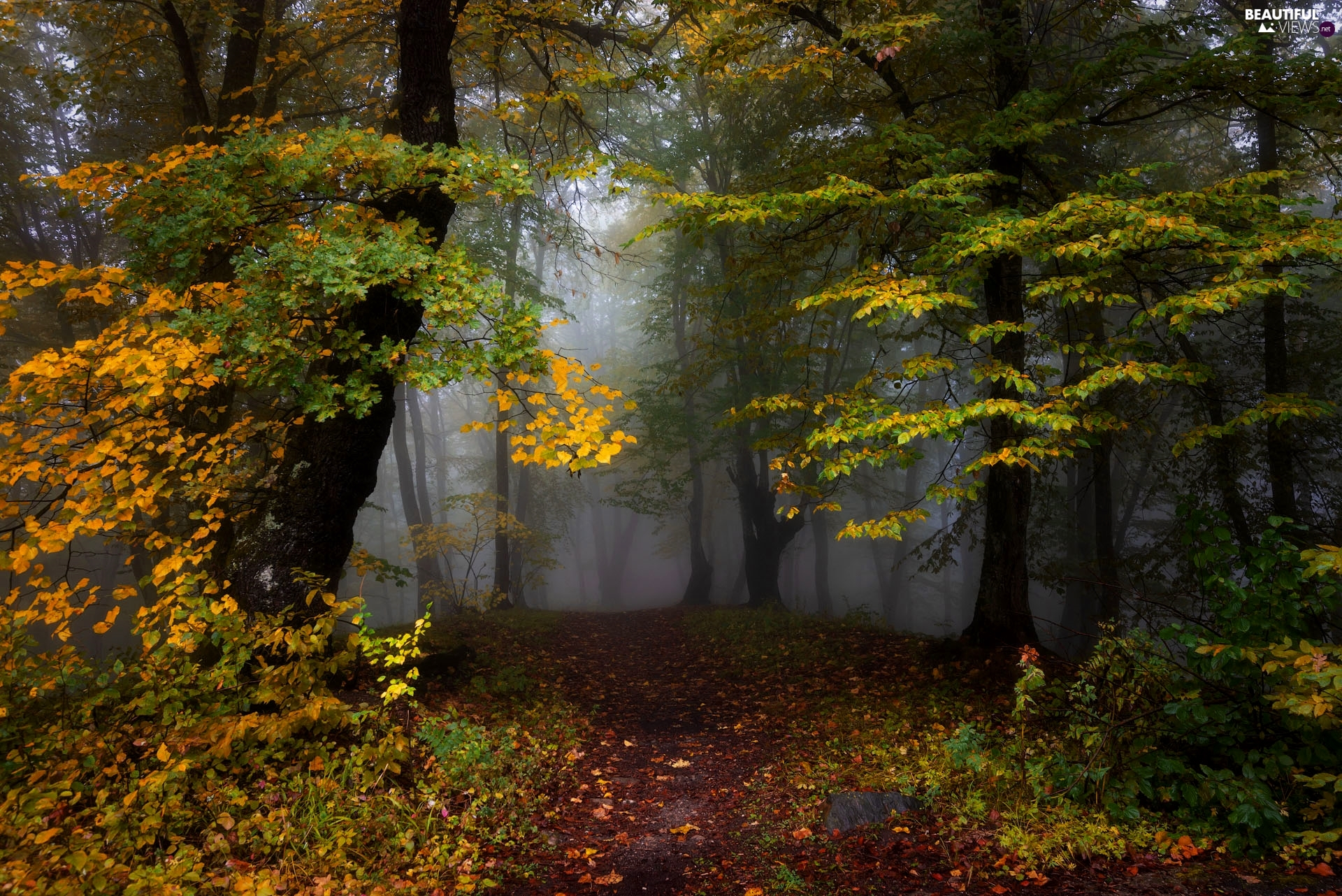 trees, forest, Yellowed, Fog, autumn, viewes, Leaf