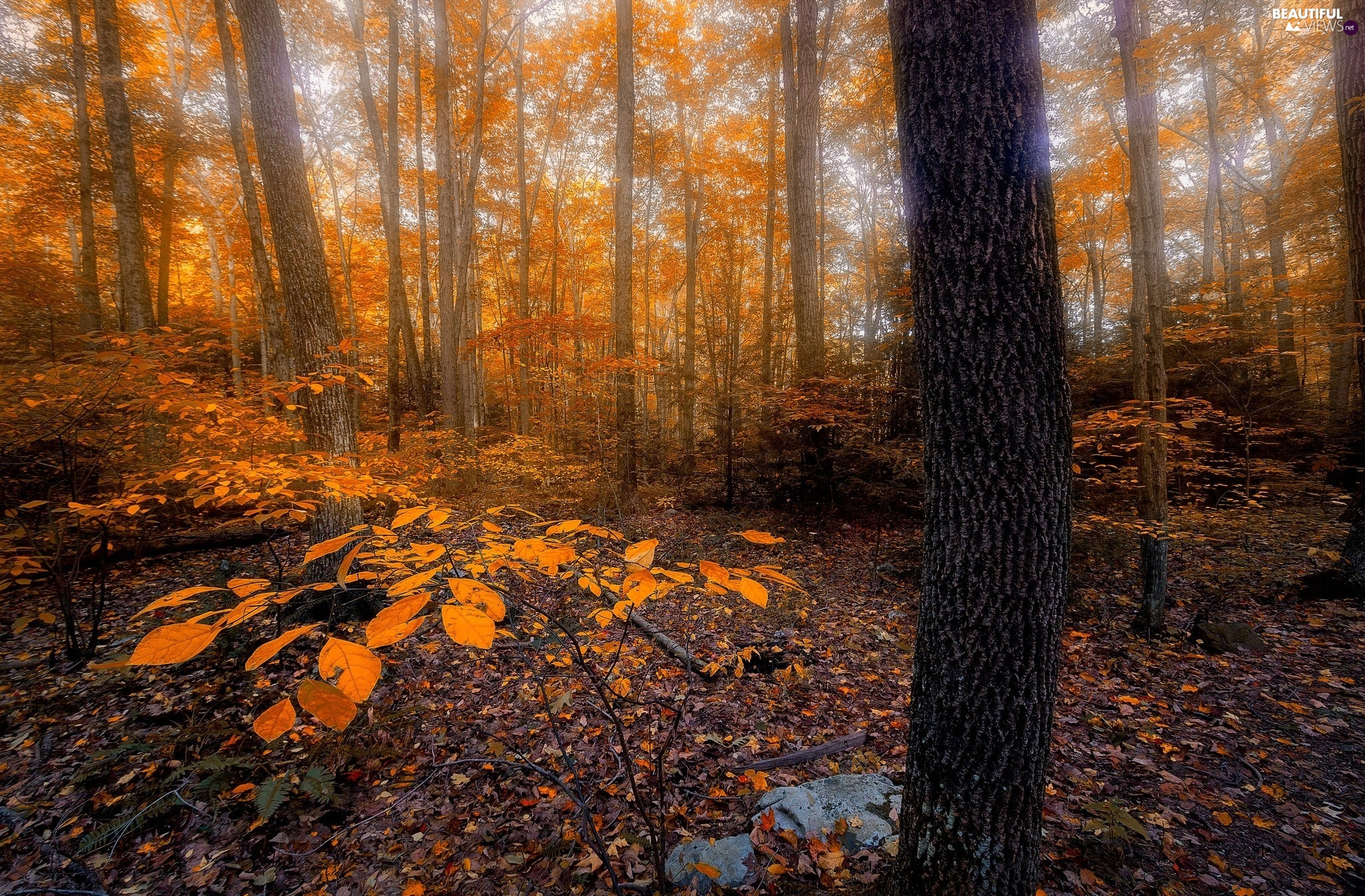 forest, Leaf, trees, viewes, autumn