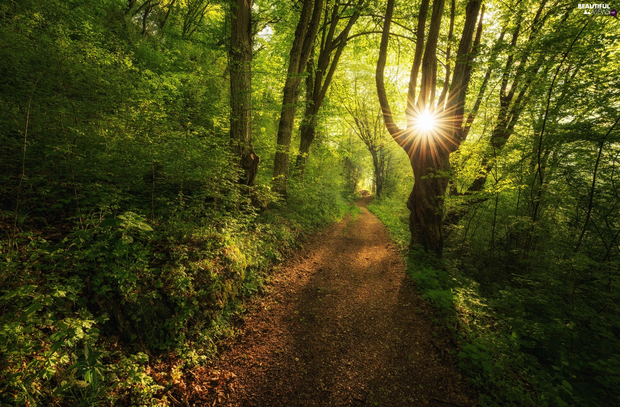 Path, rays of the Sun, trees, viewes, forest