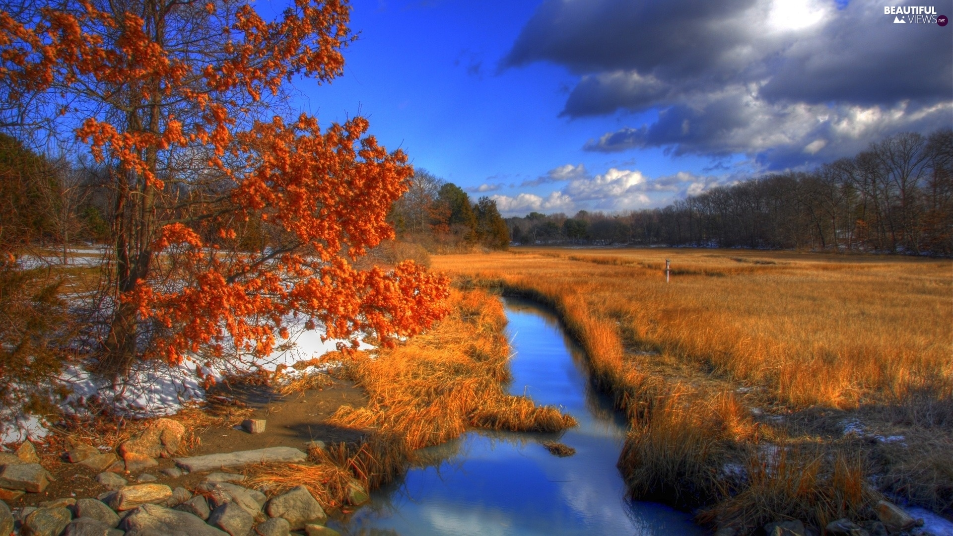 Meadow, autumn, forest, trees, grass, River