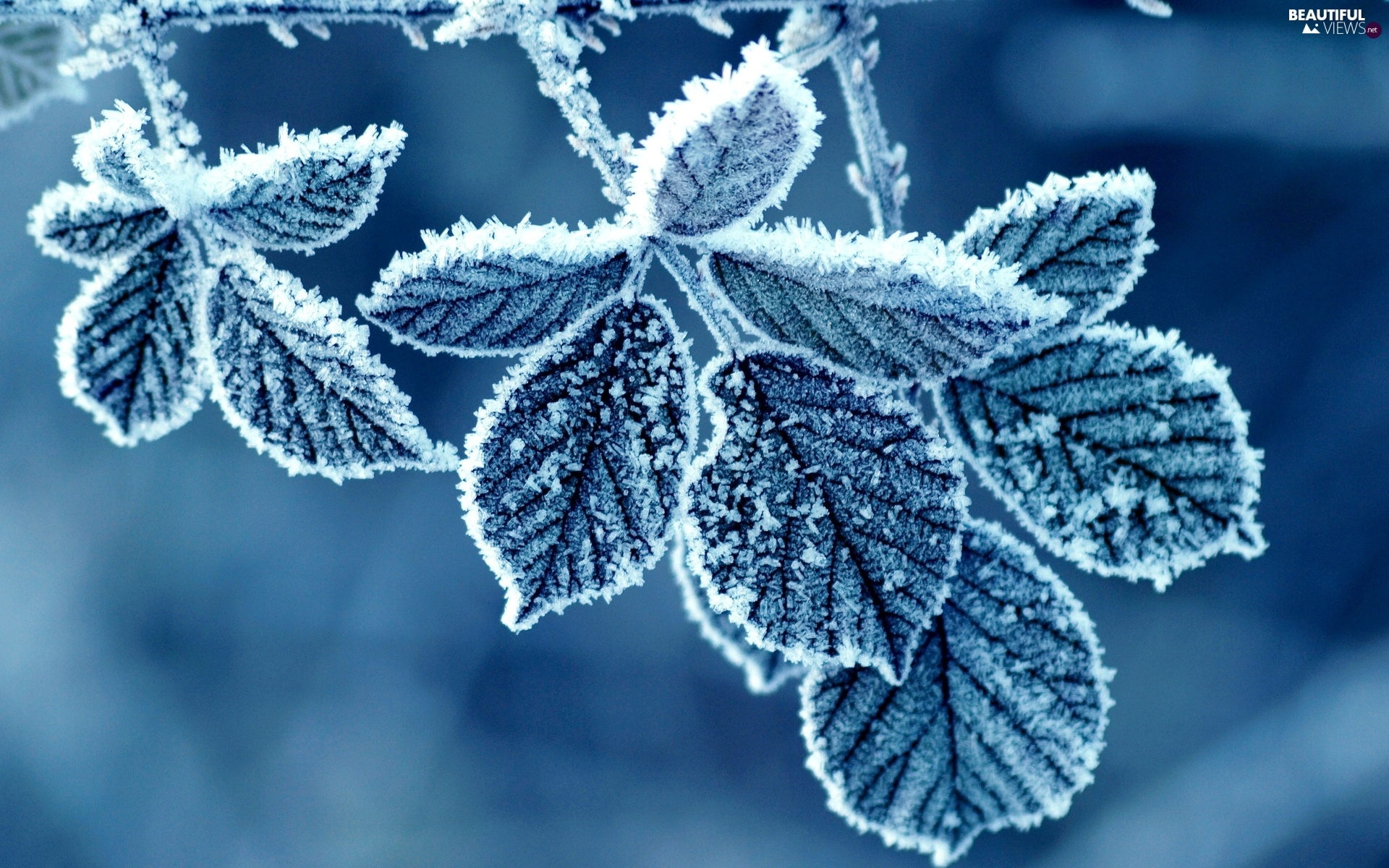 frost, Leaf, Covered