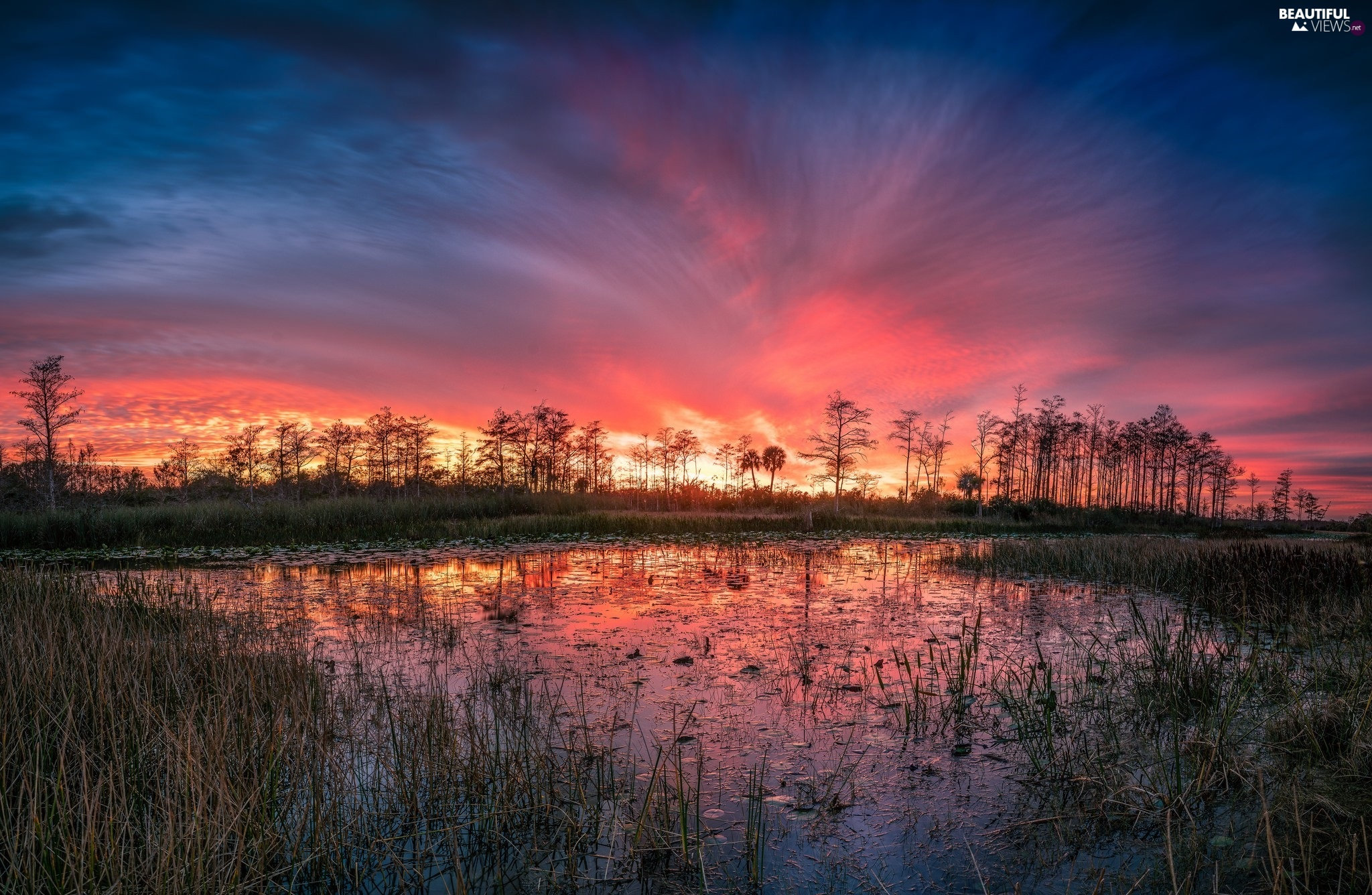 swamp, pool, grass, trees, reflection, Great Sunsets, Red, Sky, viewes