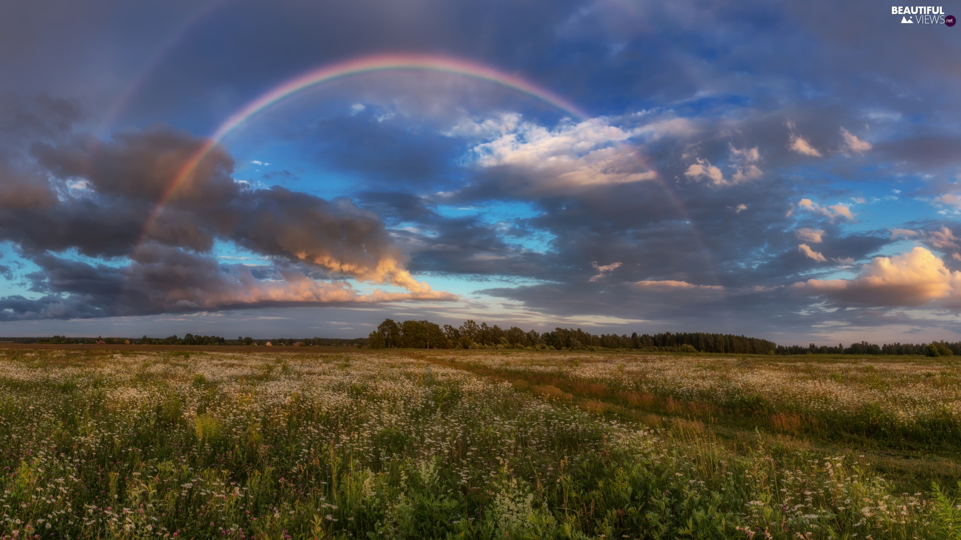 trees, Meadow, clouds, Great Rainbows, viewes, Path