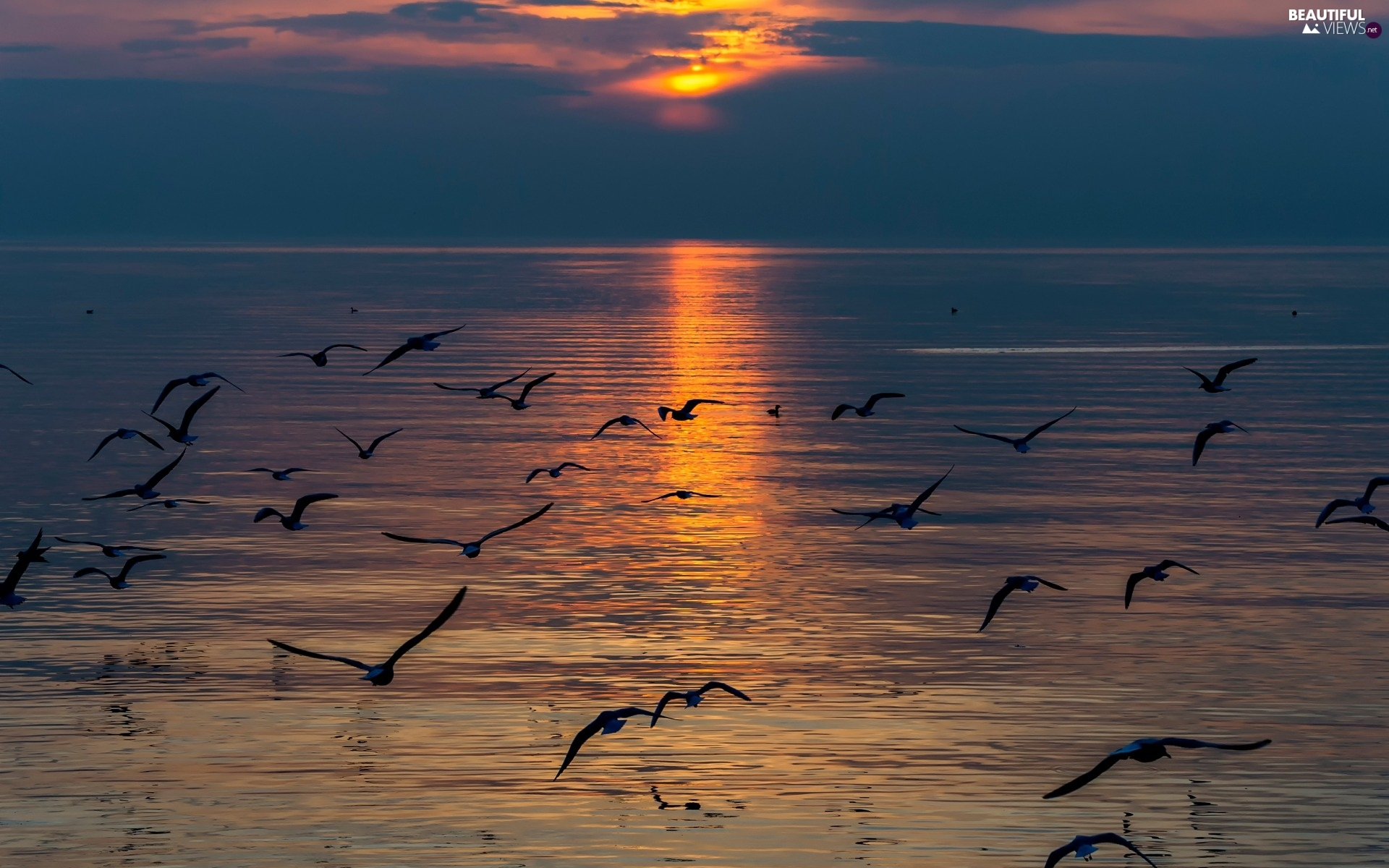 sea, gulls, Great Sunsets, birds