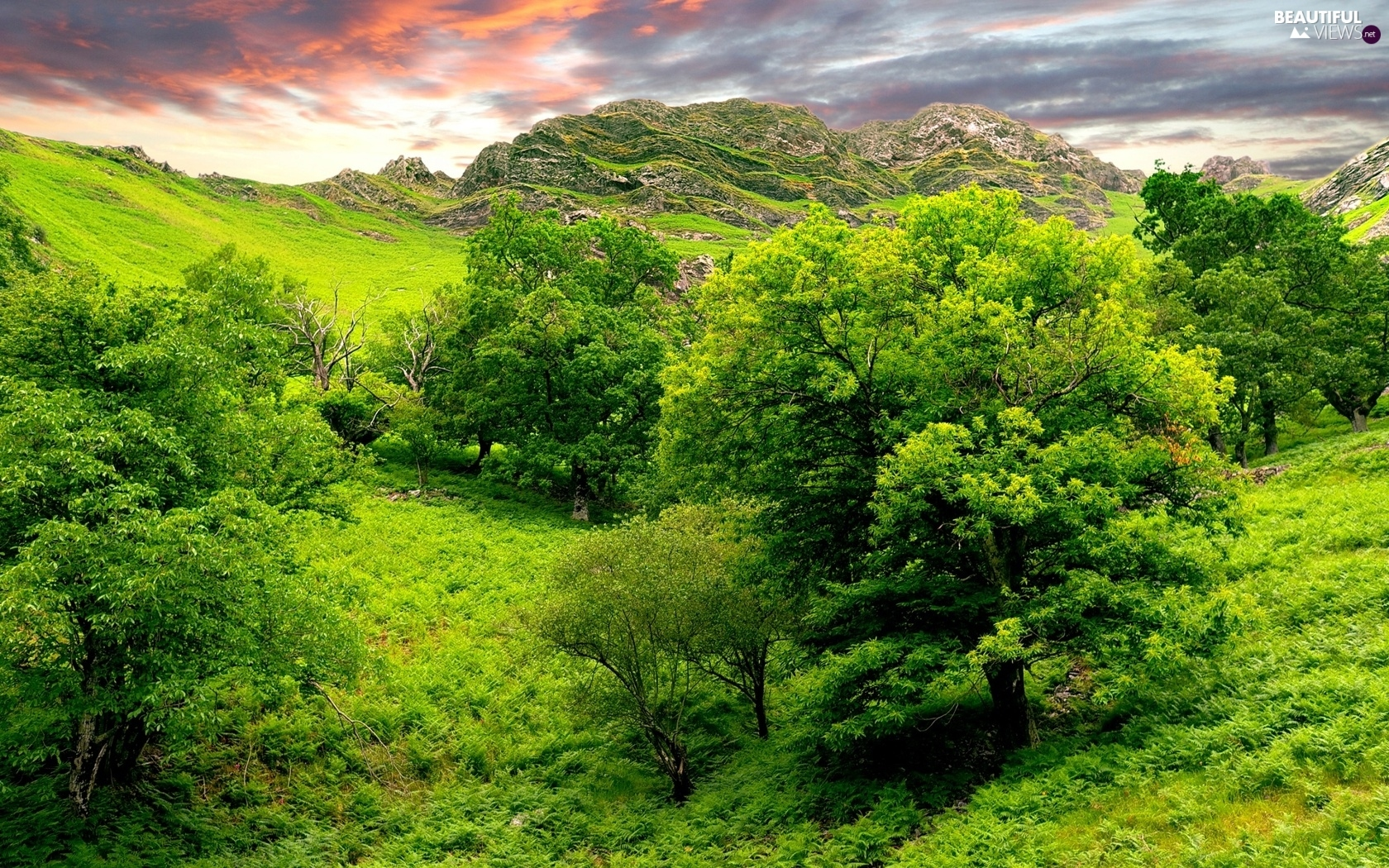 Green, Valley, trees, viewes, rocks