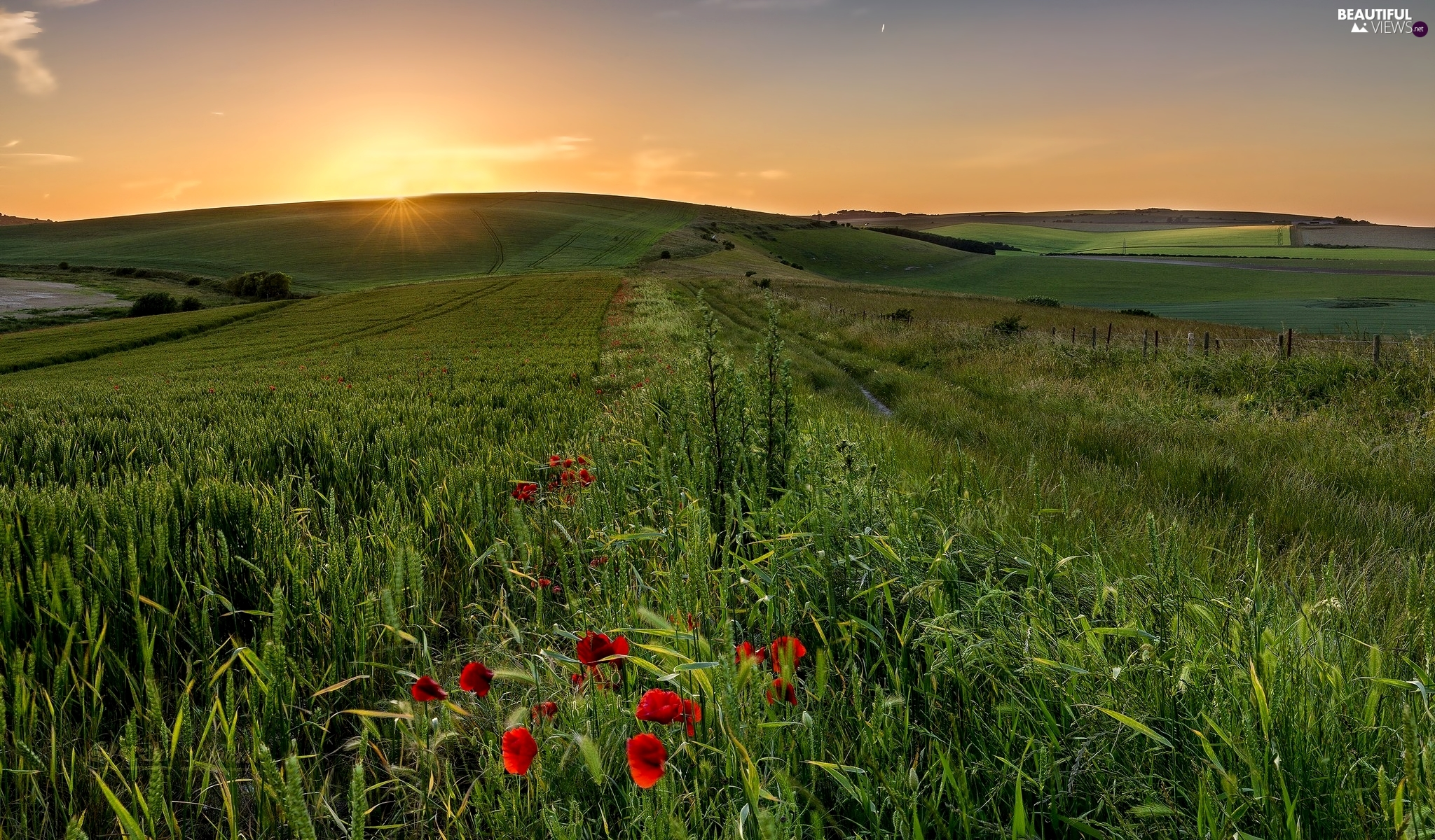 The Hills, papavers, Sunrise, Field