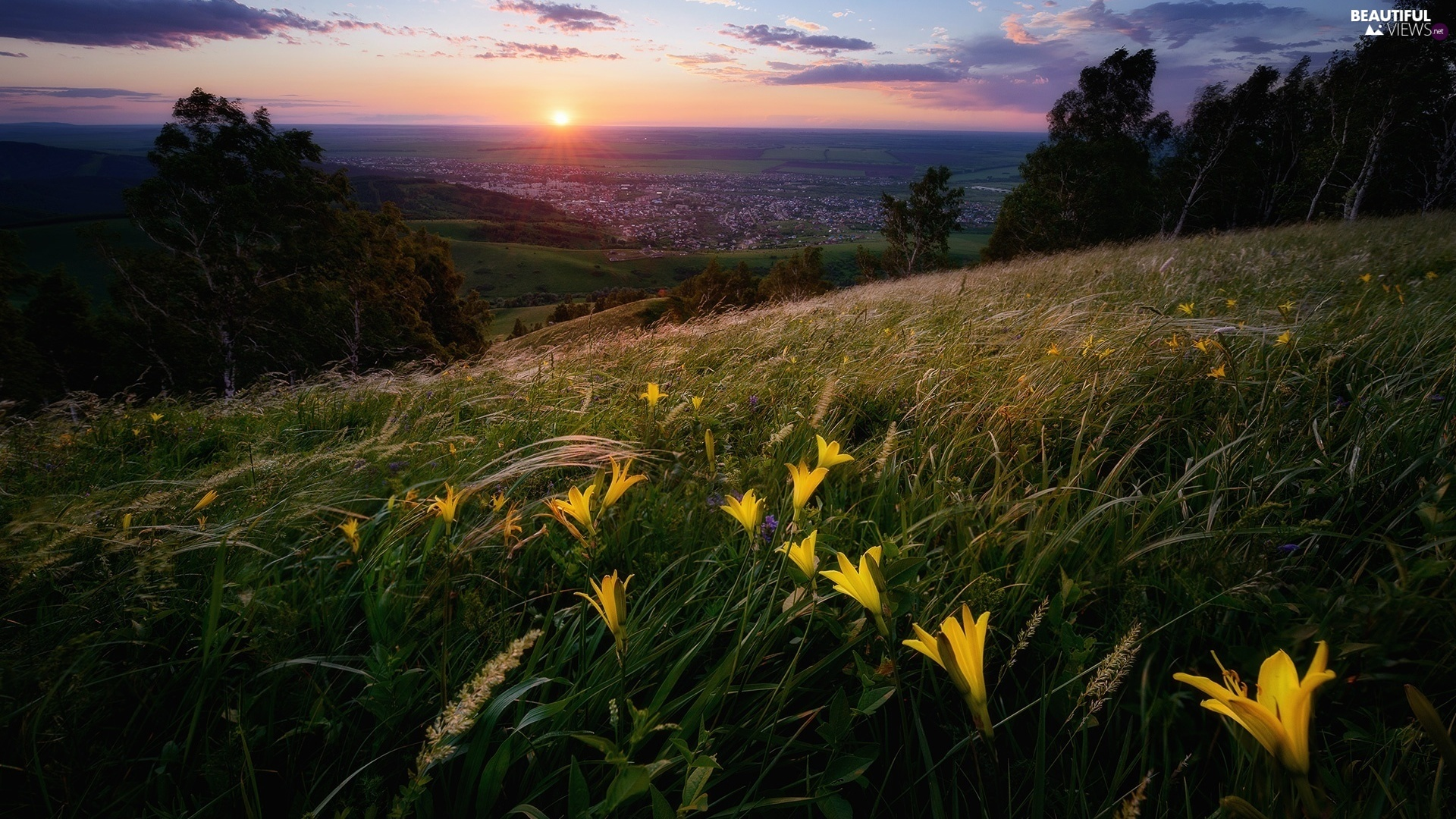 Sunrise, Flowers, The Hills, Houses, Meadow, lilies