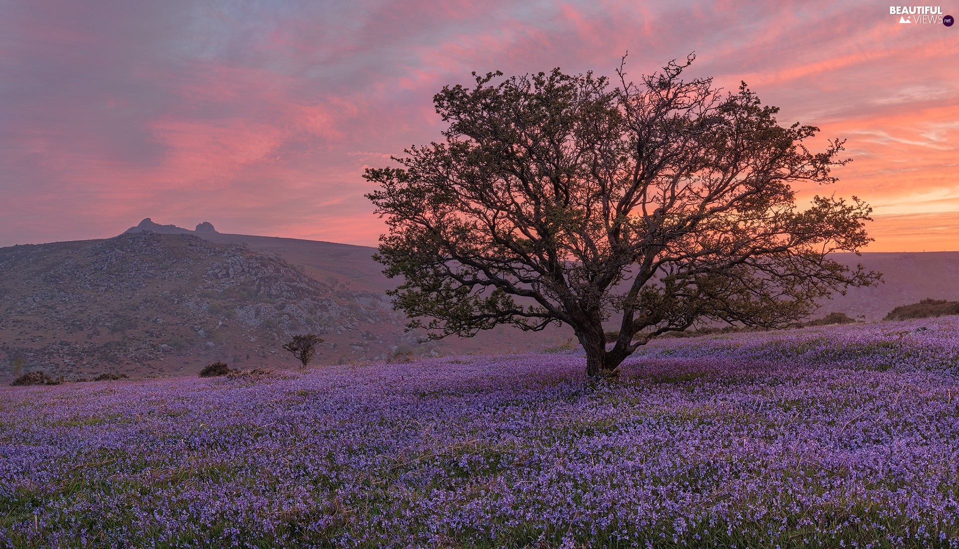 Flowers, trees, The Hills, Meadow, Great Sunsets
