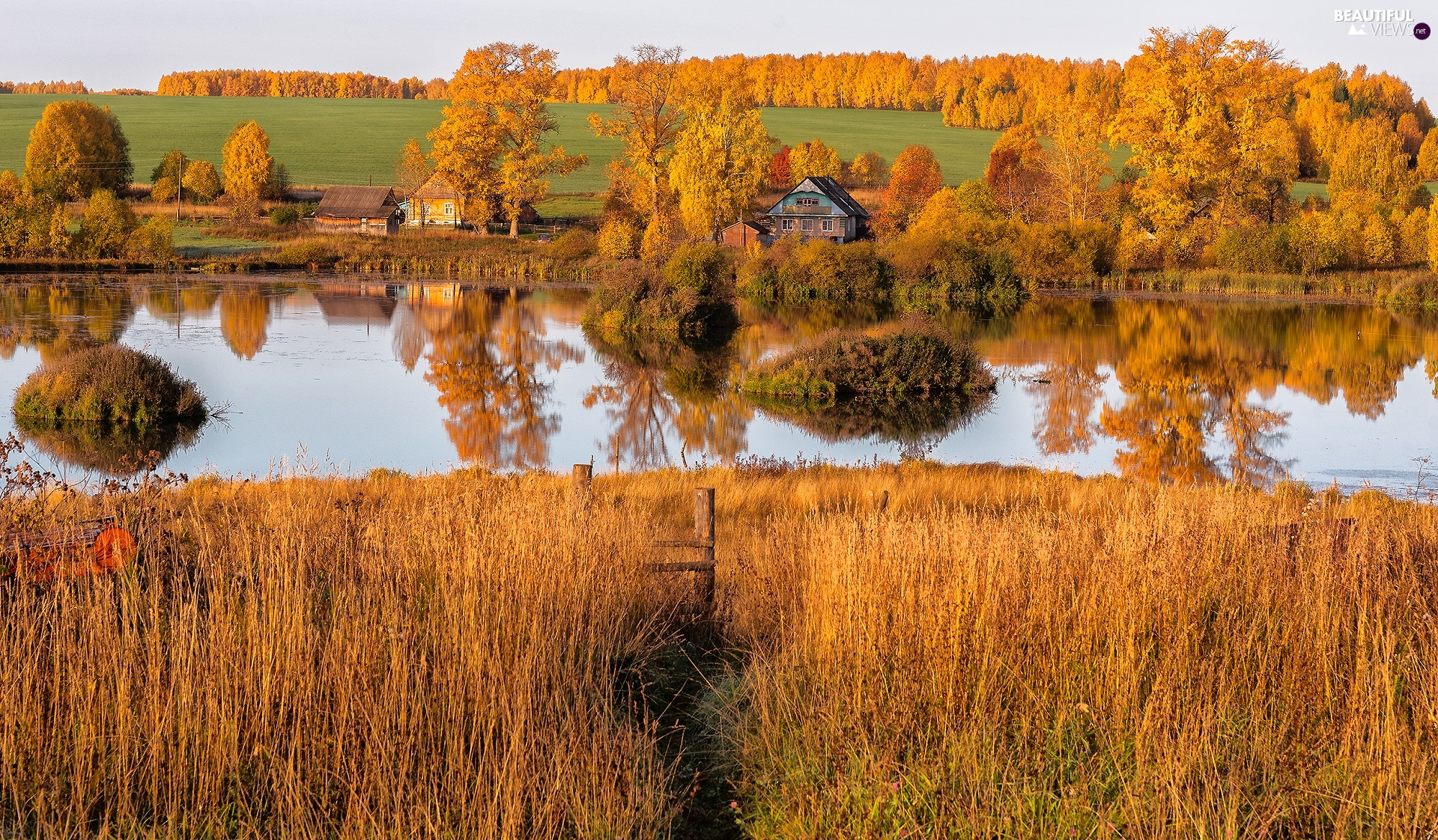 trees, River, Yellowed, Houses, autumn, viewes, grass