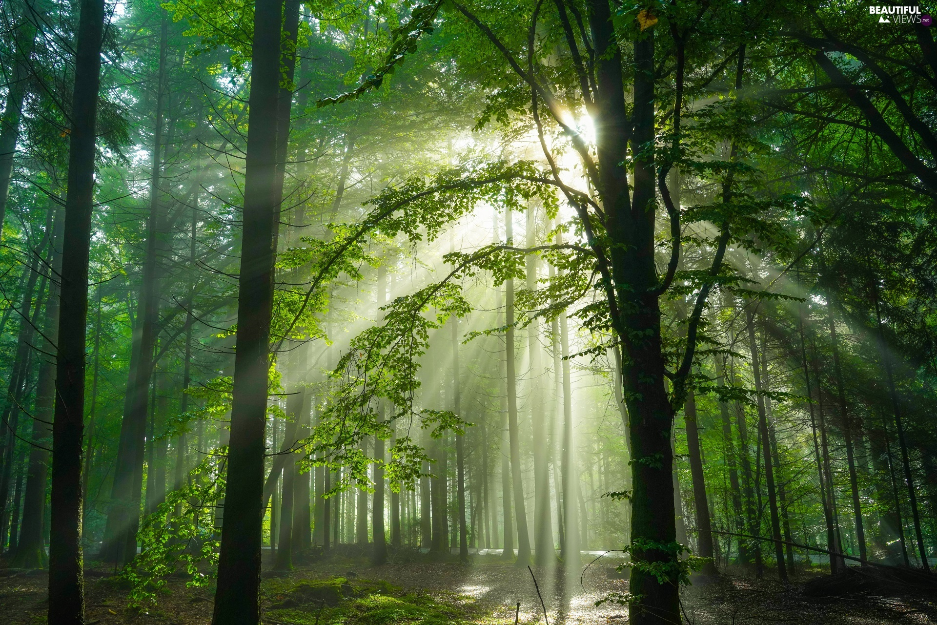 viewes, light breaking through sky, forest, trees, illuminated