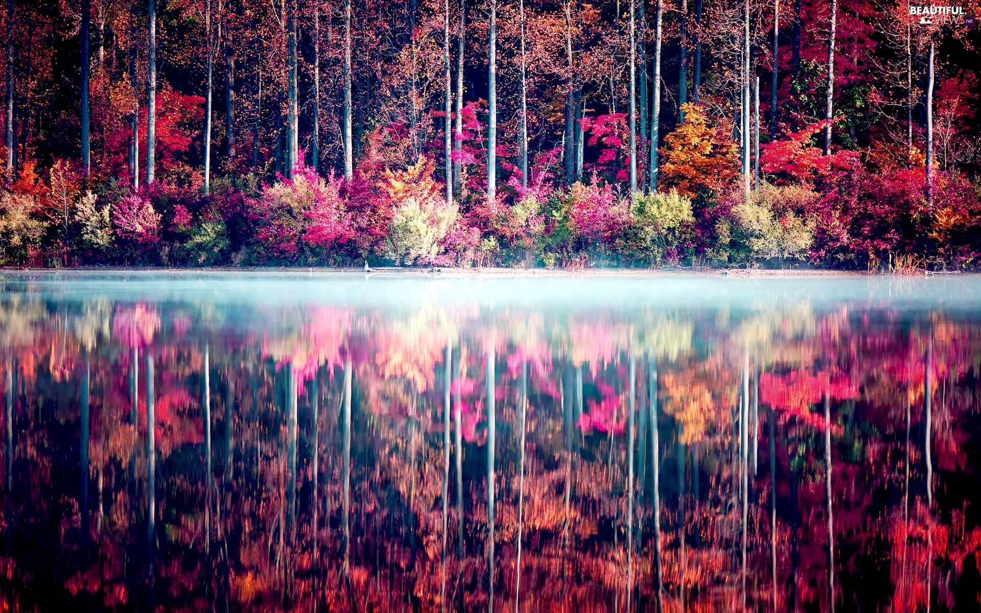 lake, reflection, trees, viewes, color