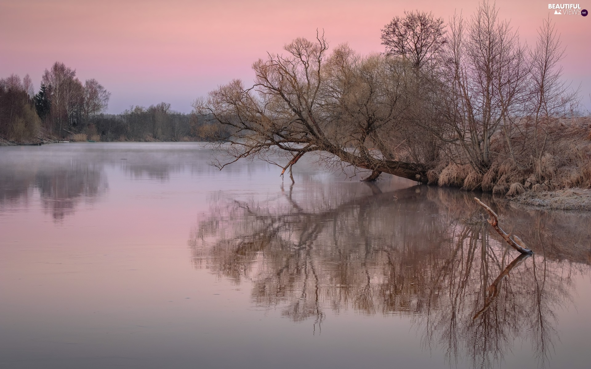 trees, dawn, Latgale, inclined, Dubna River, reflection, Latvia