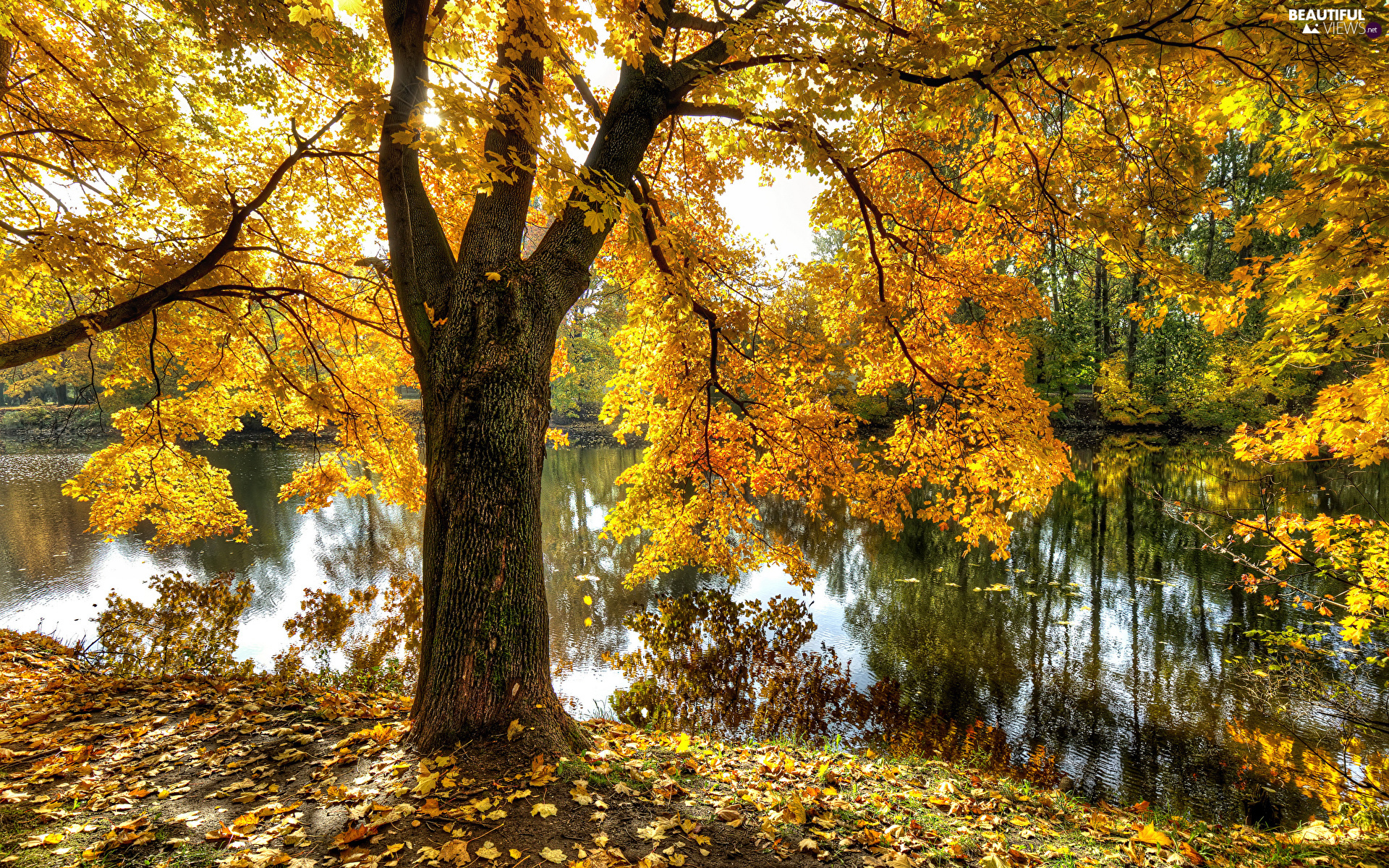 viewes, Pond - car, Leaf, autumn, Yellow, trees
