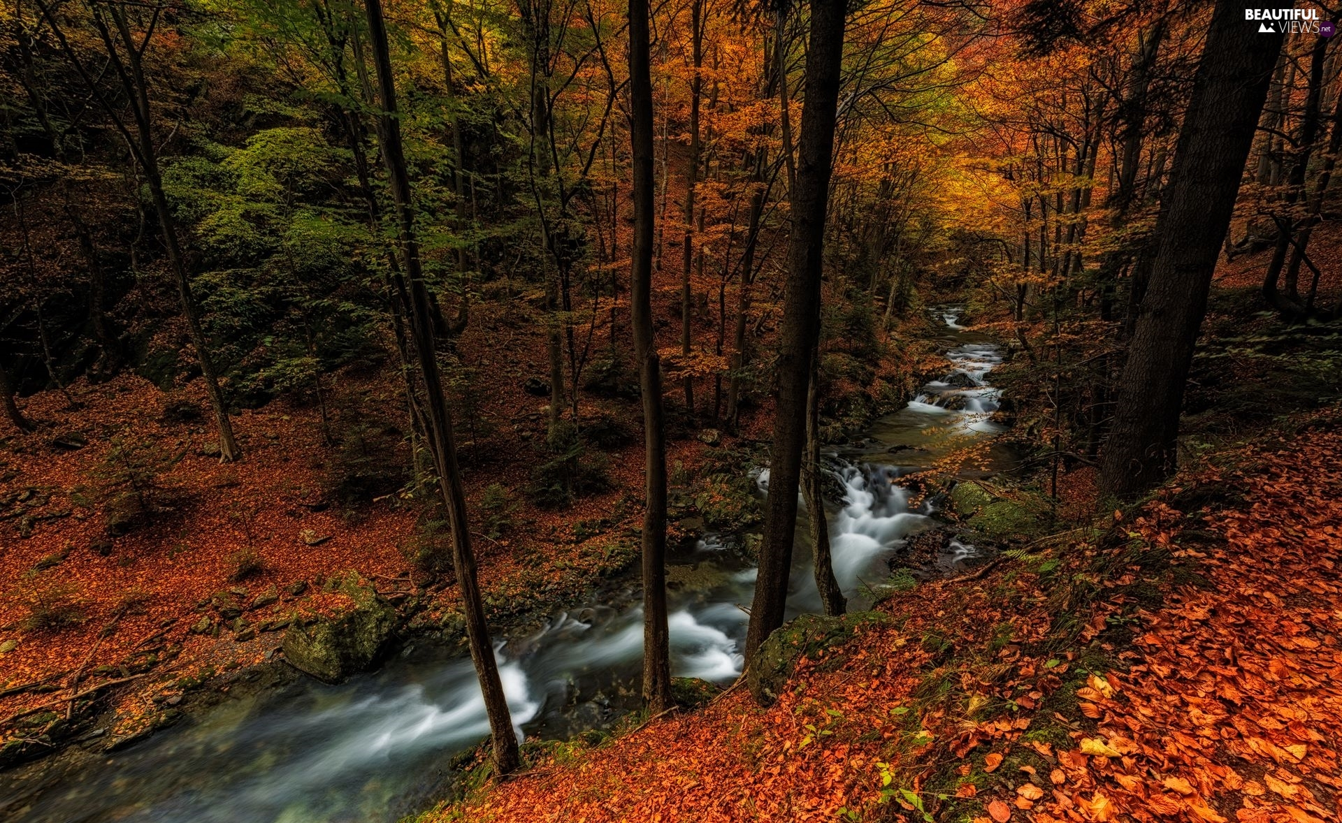 viewes, forest, autumn, Leaf, River, trees