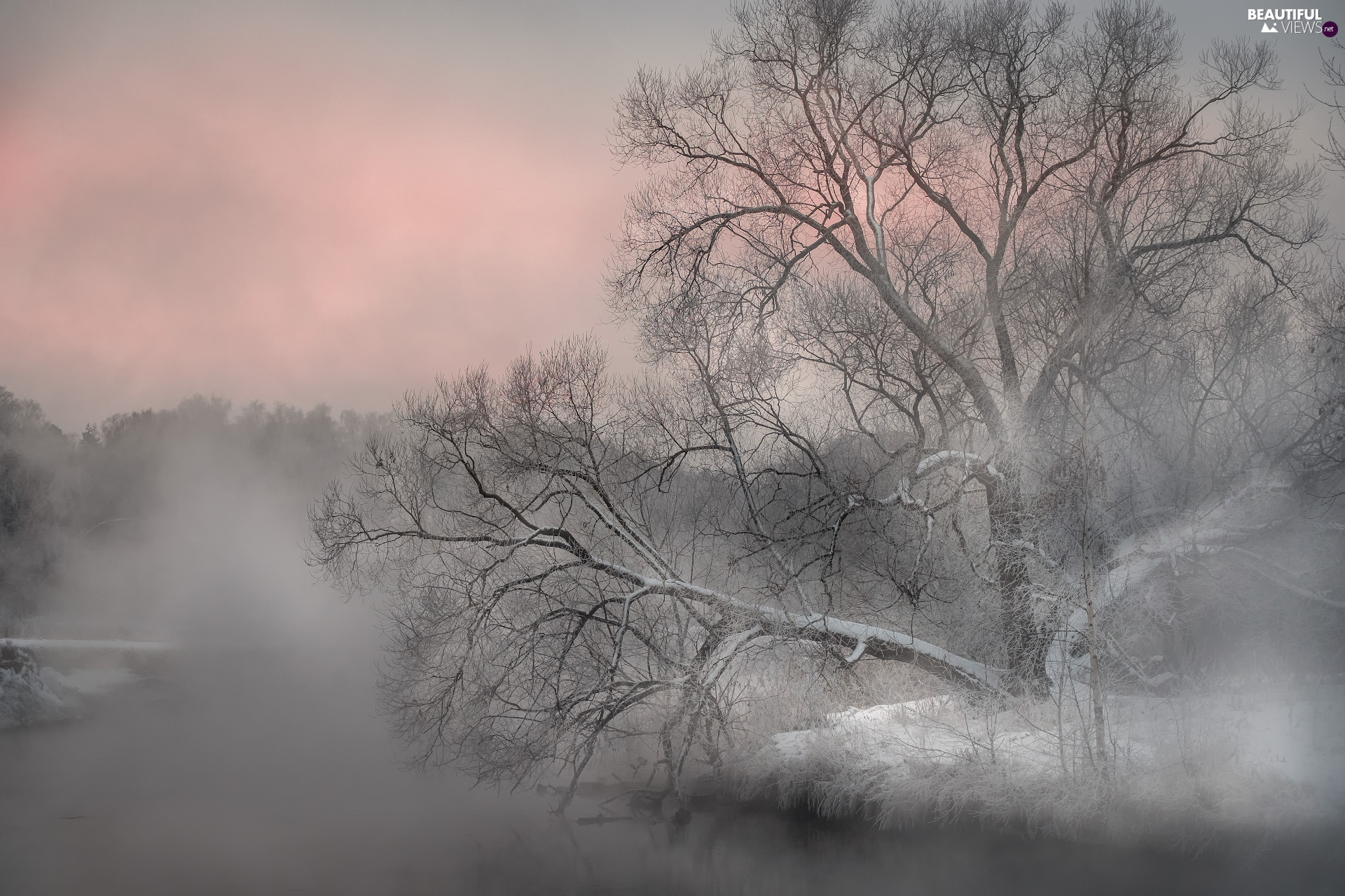 leaning, trees, River, viewes, winter, Lod on the beach, Fog