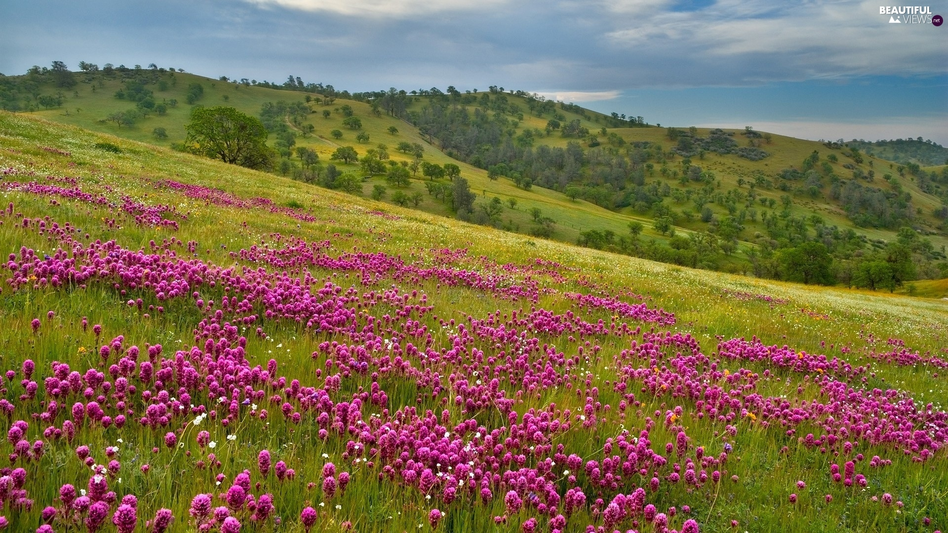 trees, mountains, Meadow, Flowers, viewes, slope