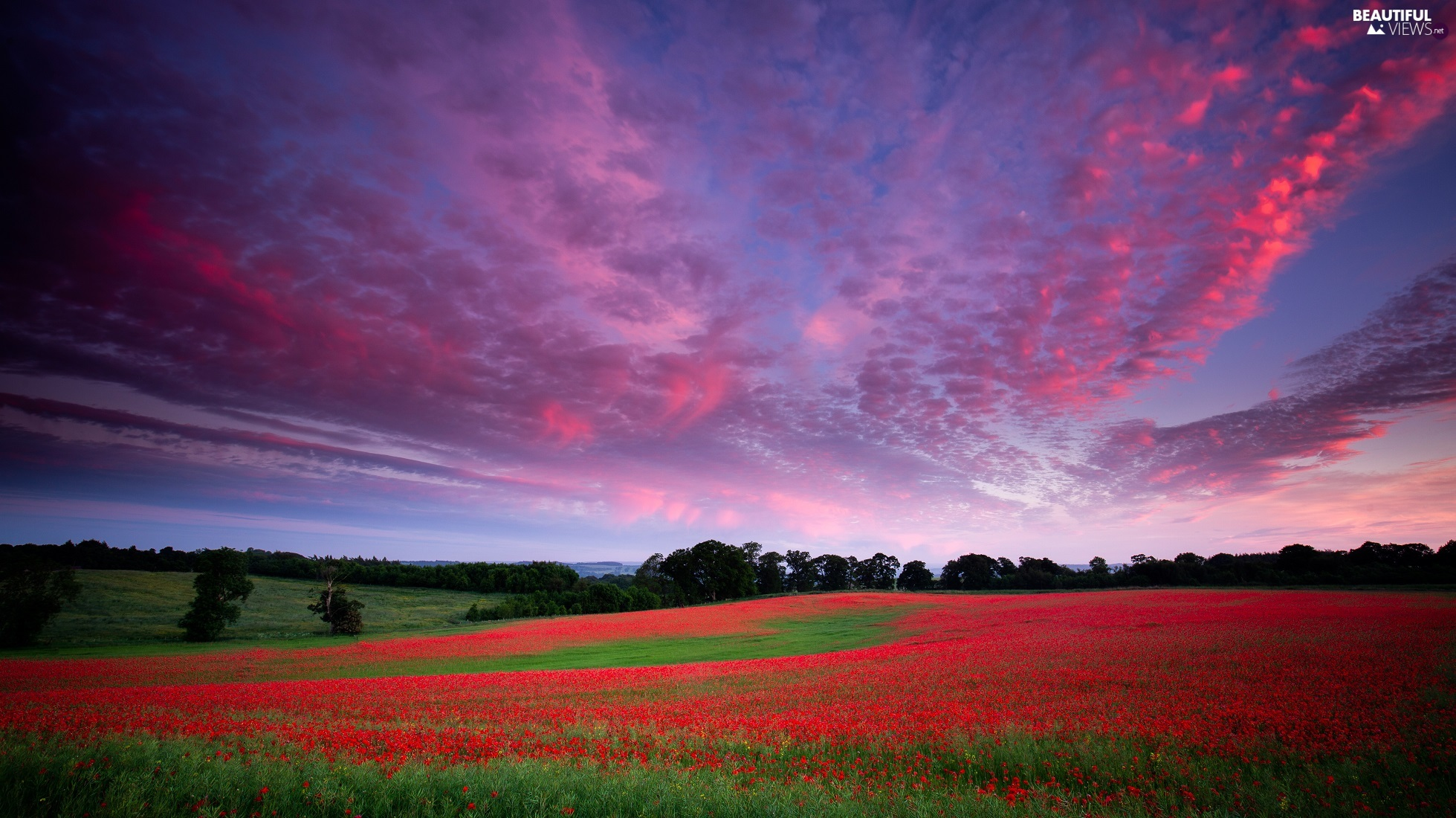 papavers, clouds, viewes, Flowers, Great Sunsets, trees, Meadow