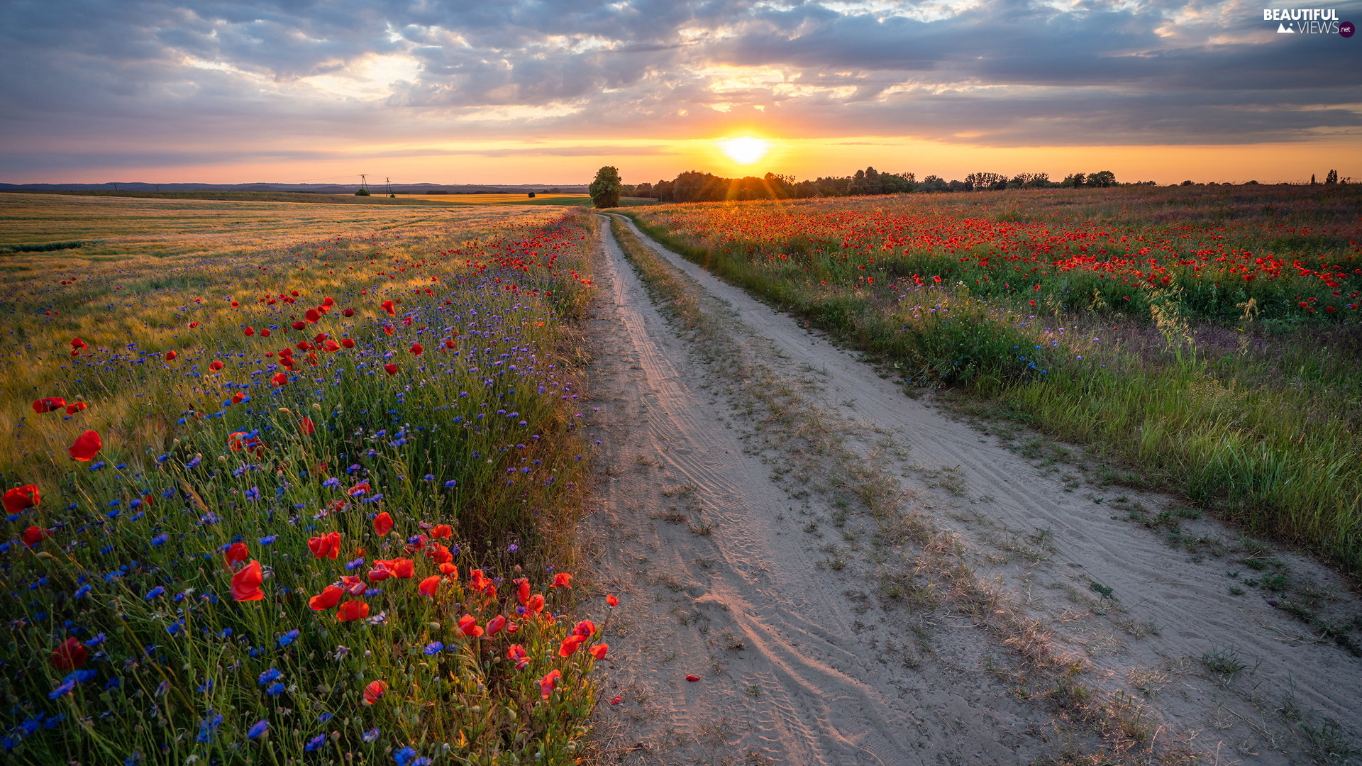 Way, Great Sunsets, medows, papavers, field